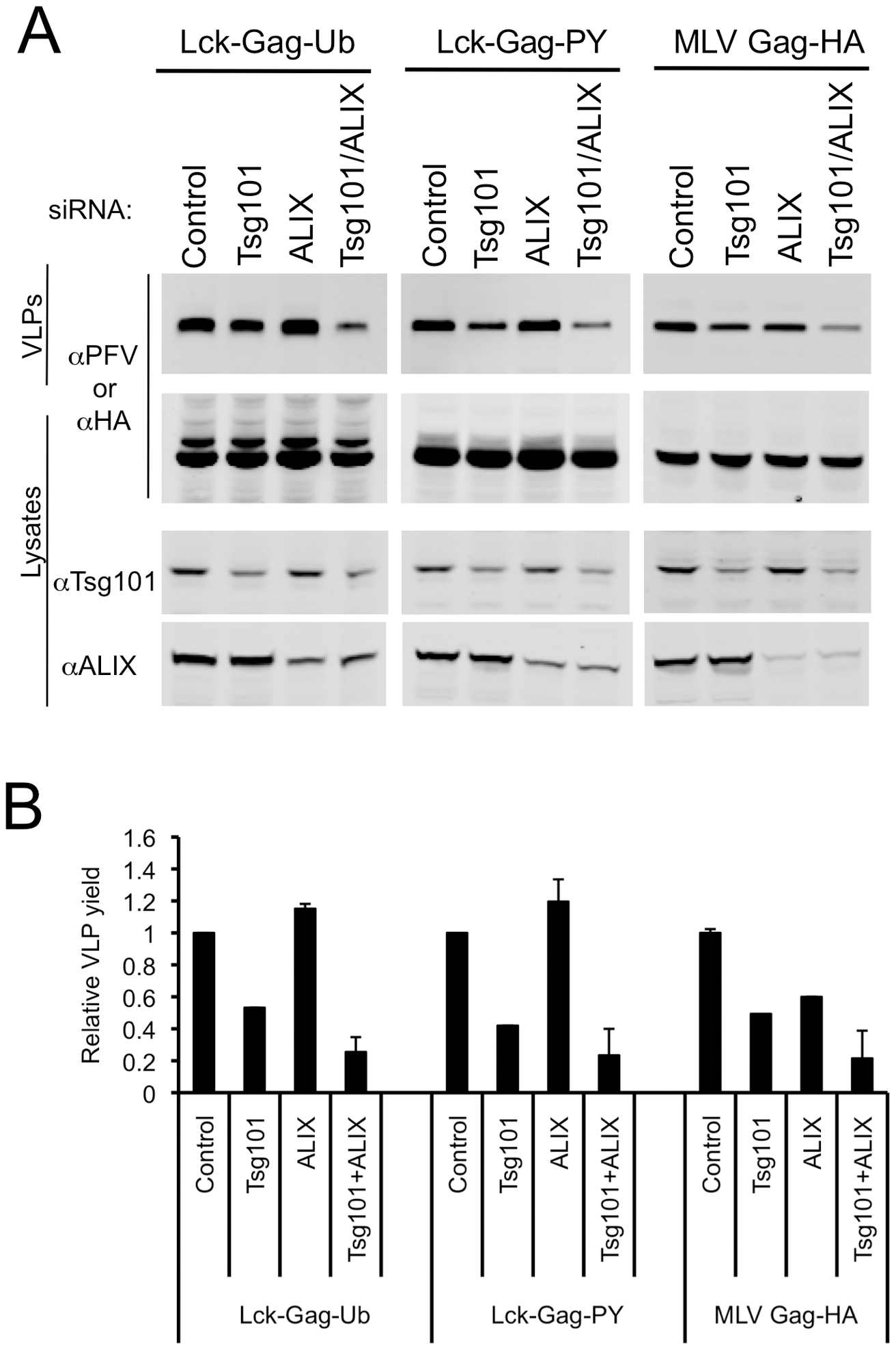 Effect of simultaneous ESCRT-I and ALIX disruption on ubiquitin-dependent and PPxY-dependent particle release.