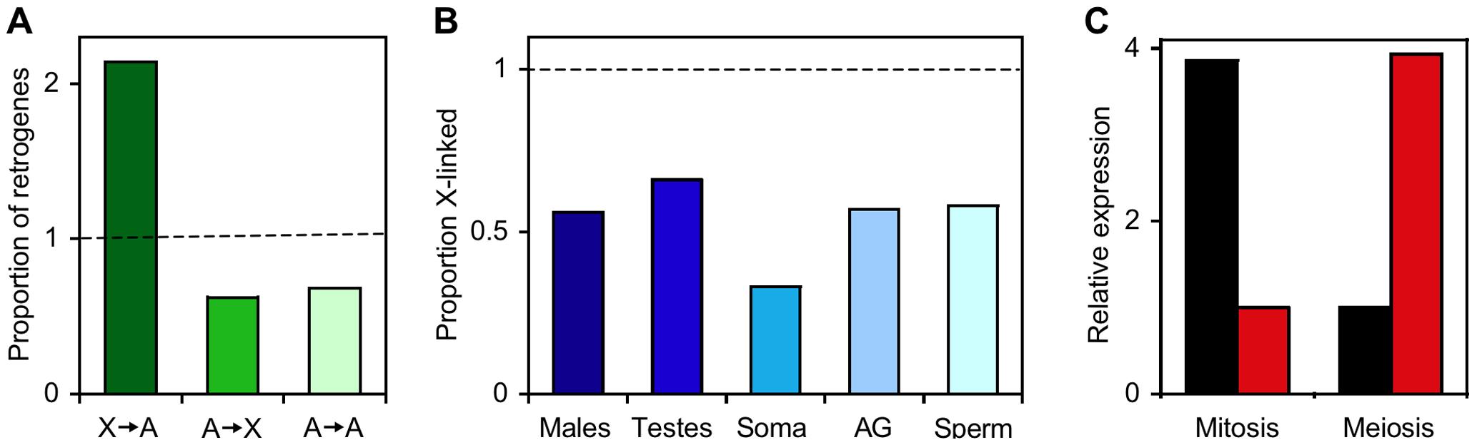 The X chromosome and autosomes of <i>Drosophila melanogaster</i> differ in retrogene and male-biased gene content.