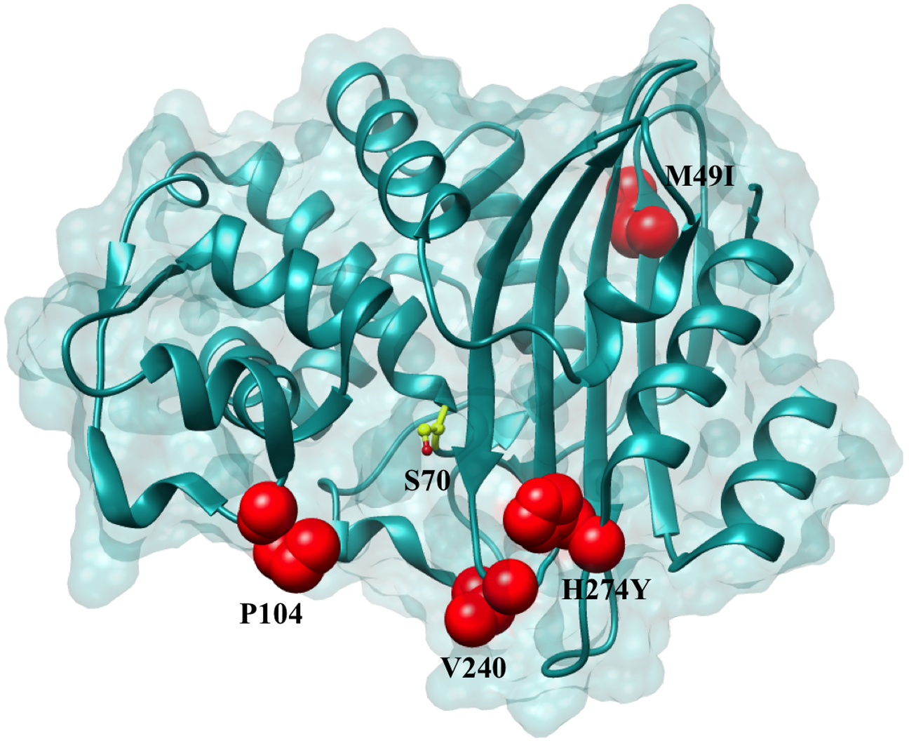 Positions of the variants residues included in this study on the KPC-2 enzyme.