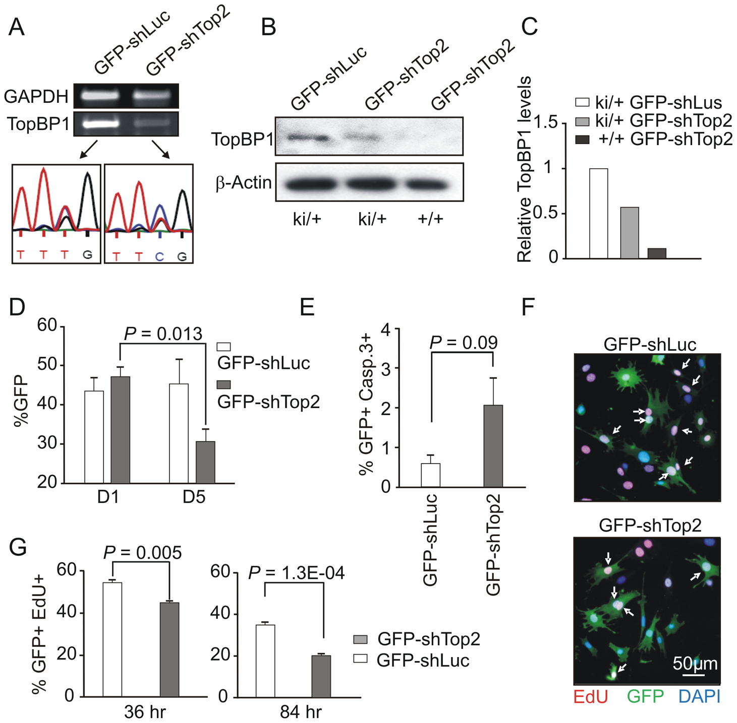 AAD mutation compromises cell proliferation and promotes cellular senescence.