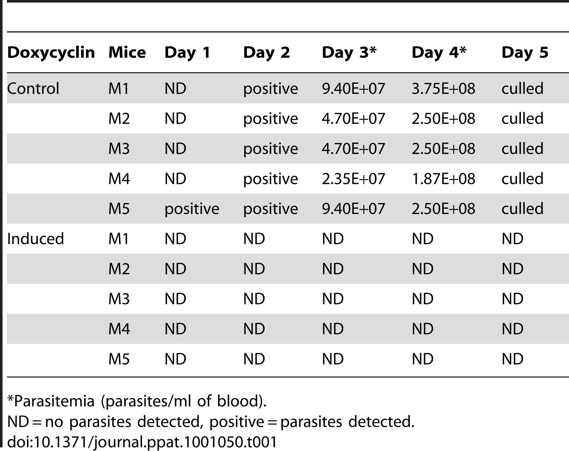 <i>In vivo</i> analysis of TbKif13-1 depletion by RNAi.
