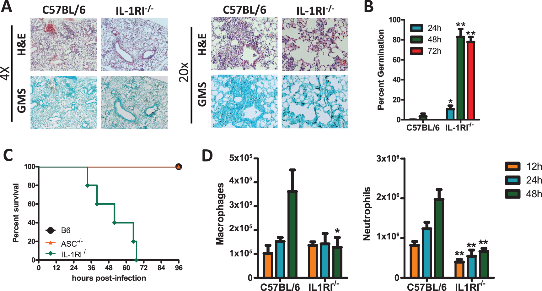 <i>Il1r1</i>-deficient mice are highly susceptible to <i>Aspergillus fumigatus</i> infection.