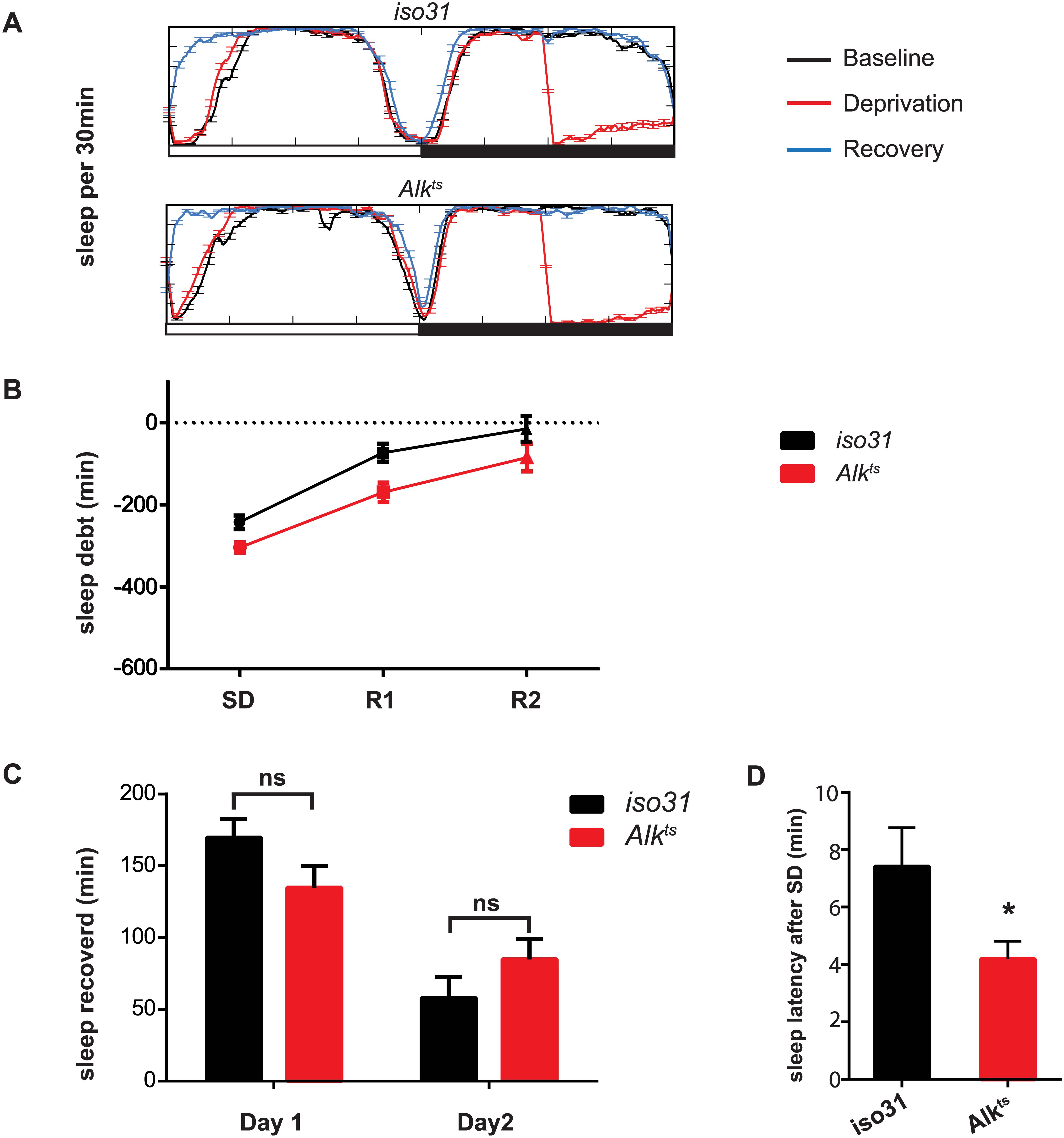 Homeostatic response to sleep loss in <i>Alk</i> mutants.