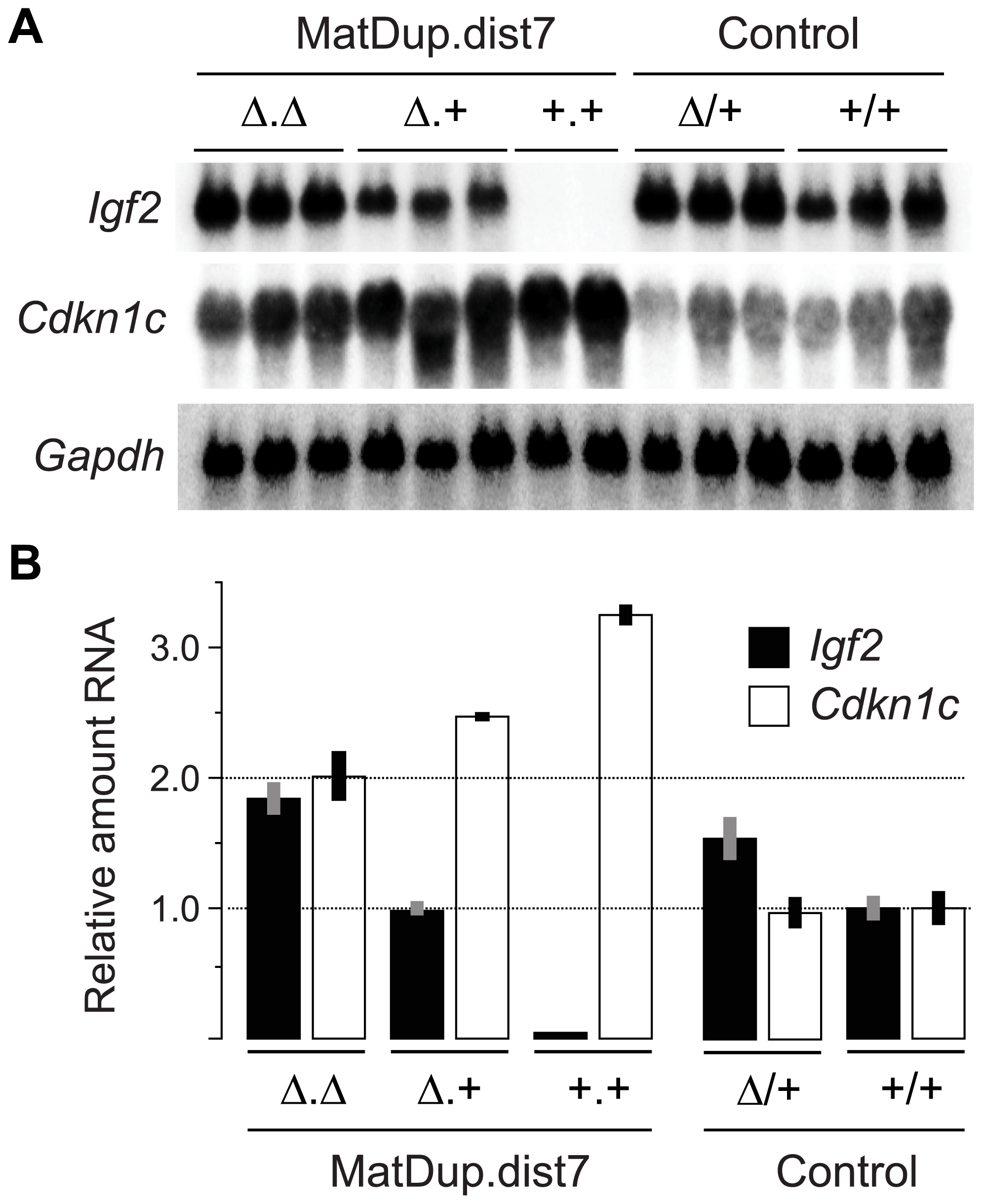 Expression of imprinted genes in 13½ dpc MatDup.dist7 fetuses.