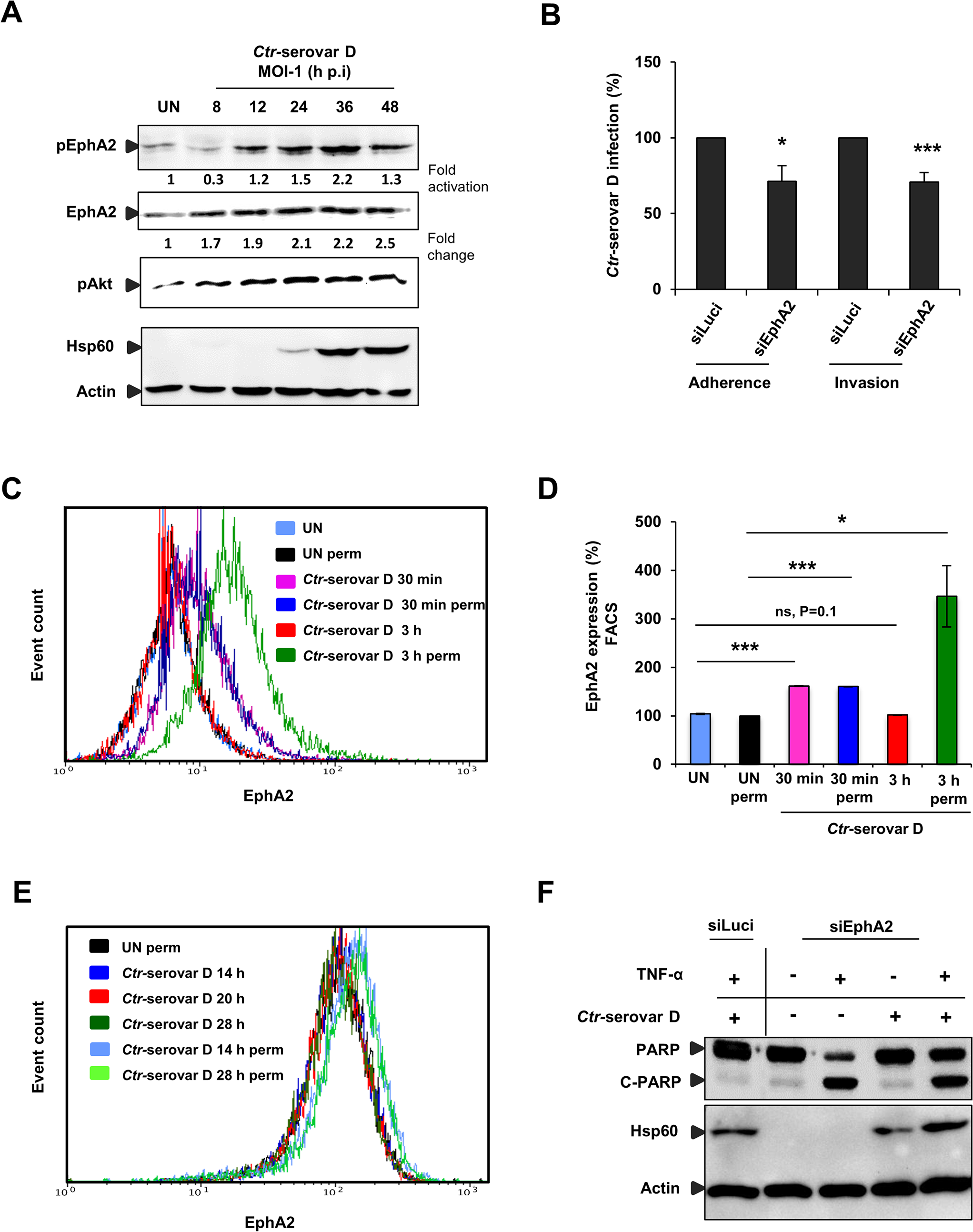 <i>Ctr</i>-serovar D utilize EphA2 signaling to invade the cells and to prevent apoptosis induced by TNF-α.