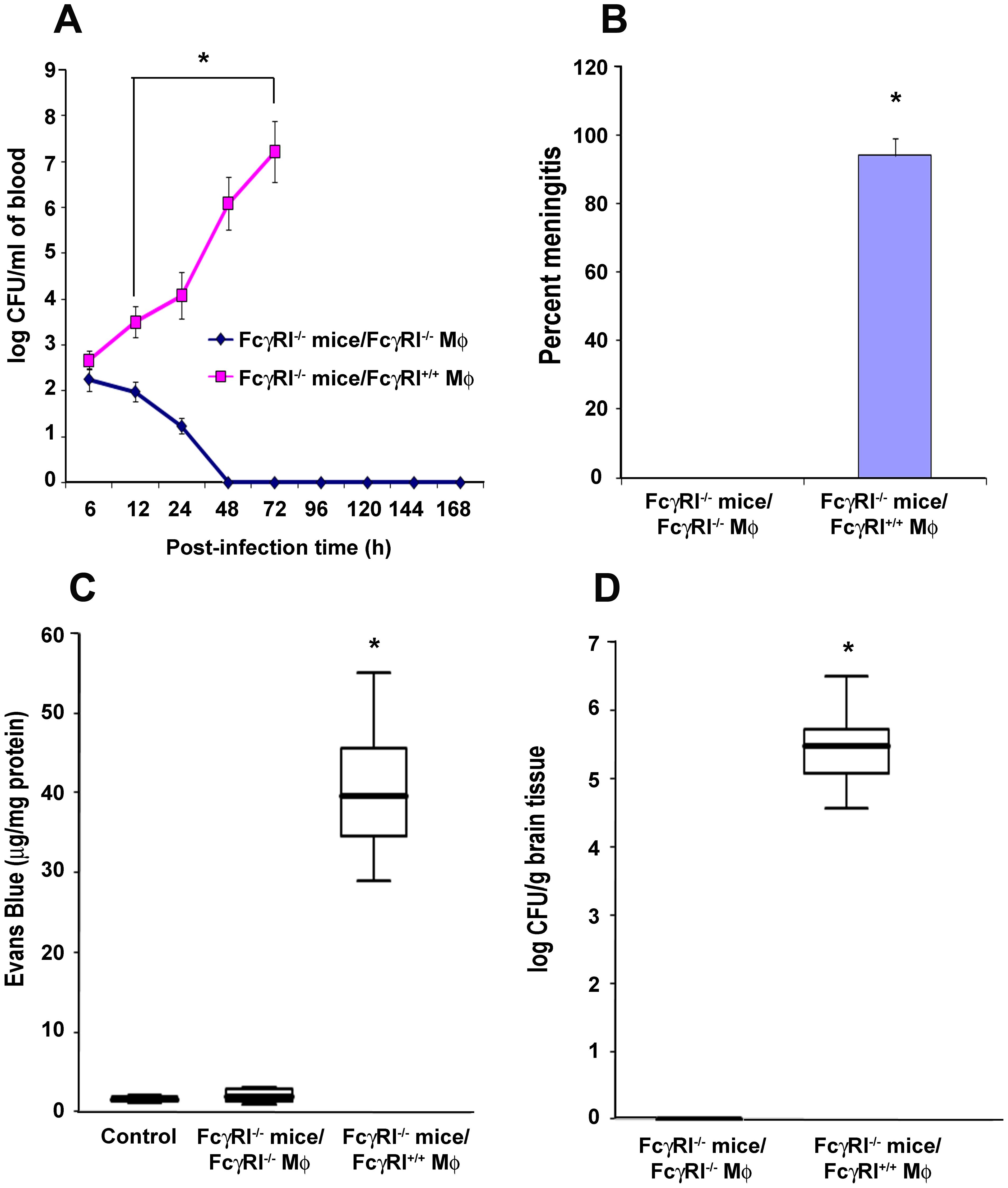 Adoptive transfer of FcγRIa<sup>+/+</sup> MØ into FcγRIa<sup>−/−</sup> mice restored the susceptibility to <i>E. coli</i> K1 meningitis.