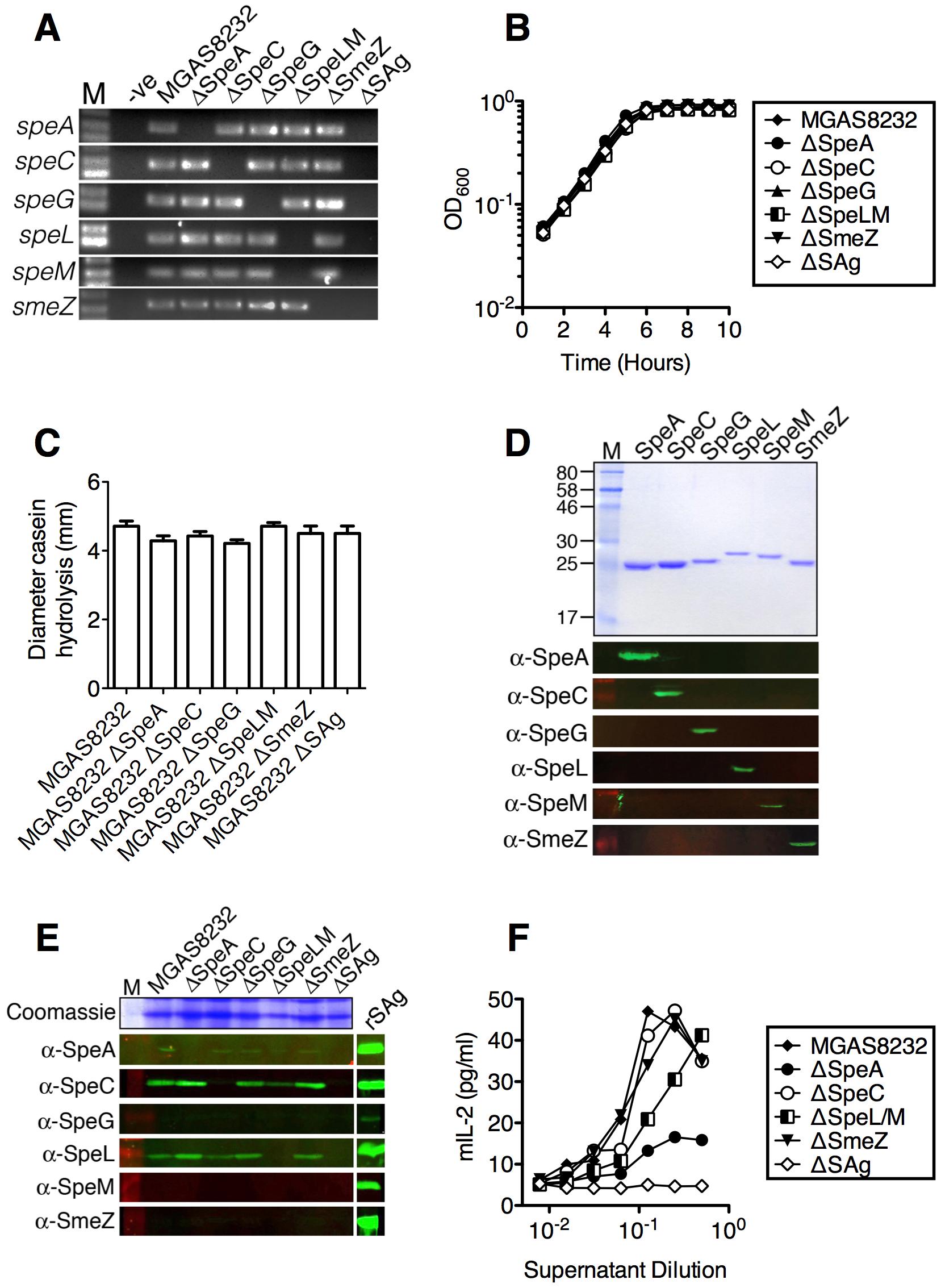 Generation of isogenic <i>S. pyogenes</i> genetic mutants lacking superantigen genes.