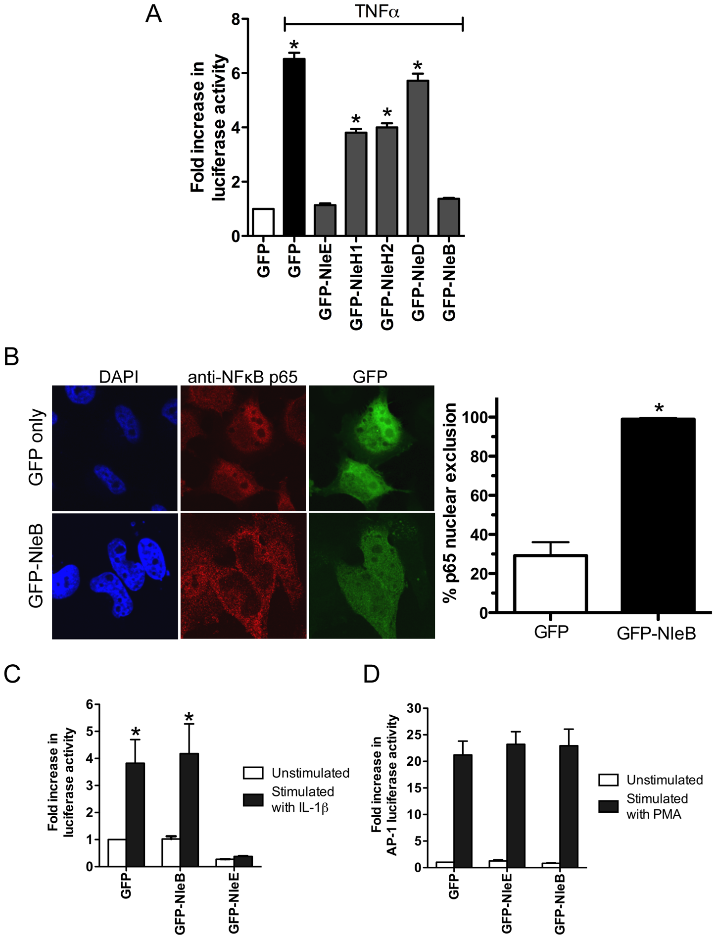 Inhibition of NF-κB activation by NleB.