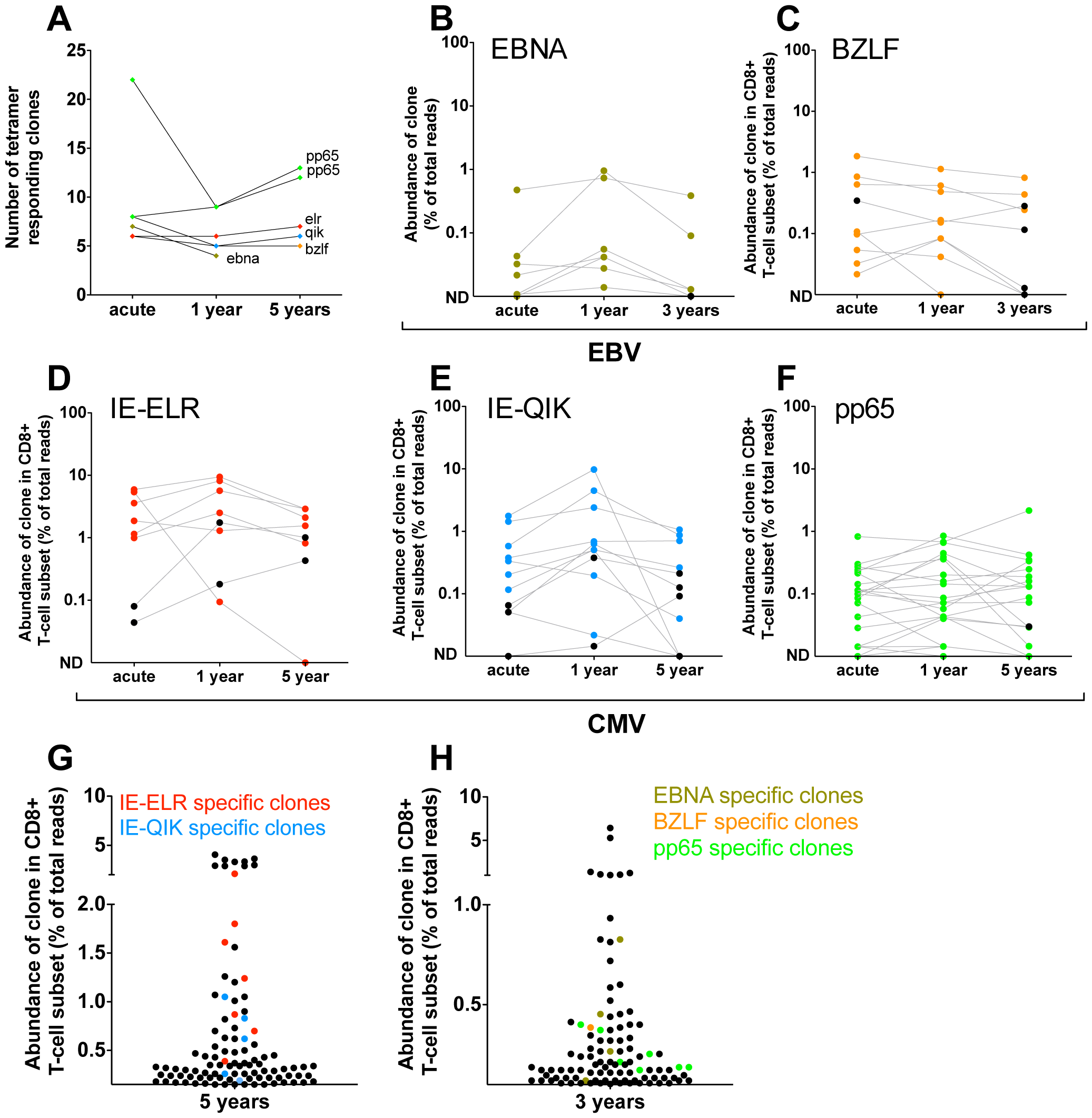 Quantification of clonal response in latent phase of response against hCMV and EBV.