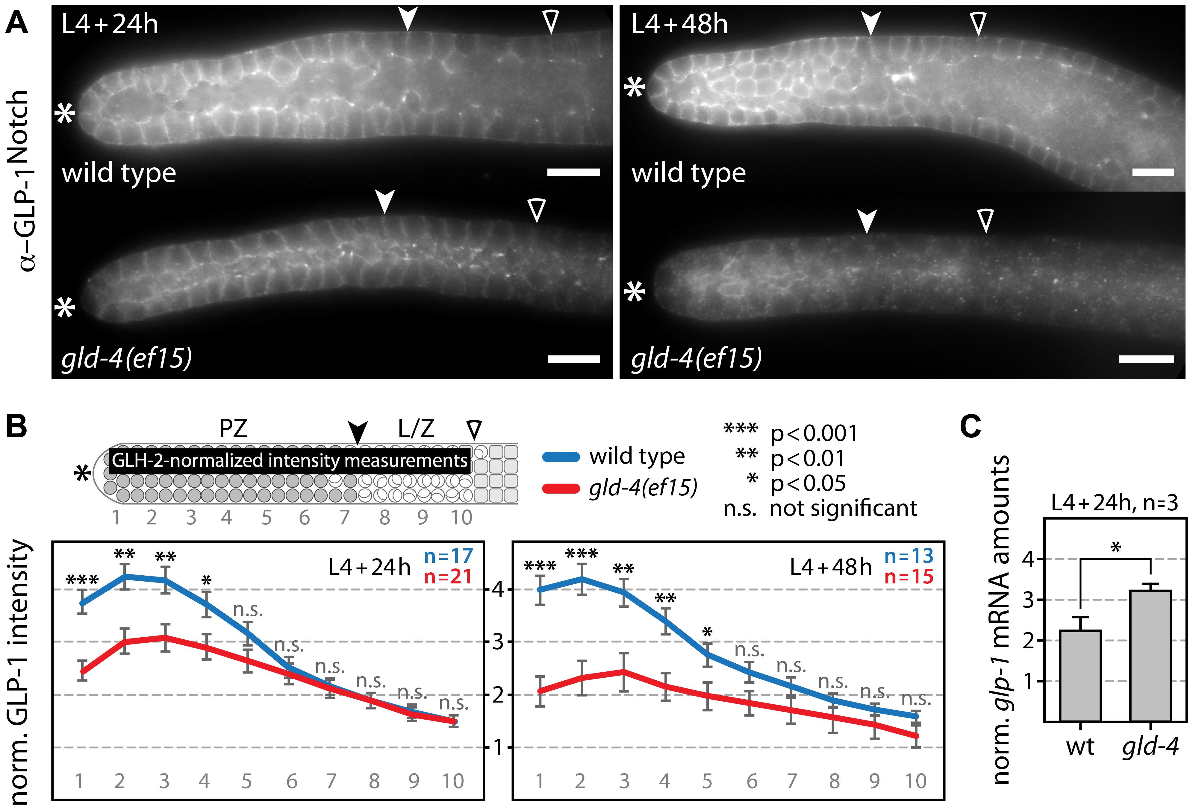 GLD-4 promotes endogenous GLP-1 expression.