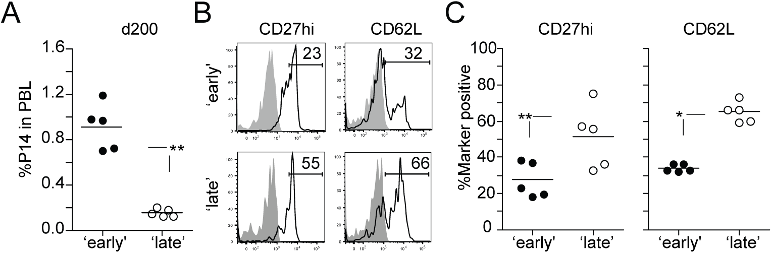 Late stimulated 1° M CD8 T cells acquire a long-term 2° M phenotype faster.