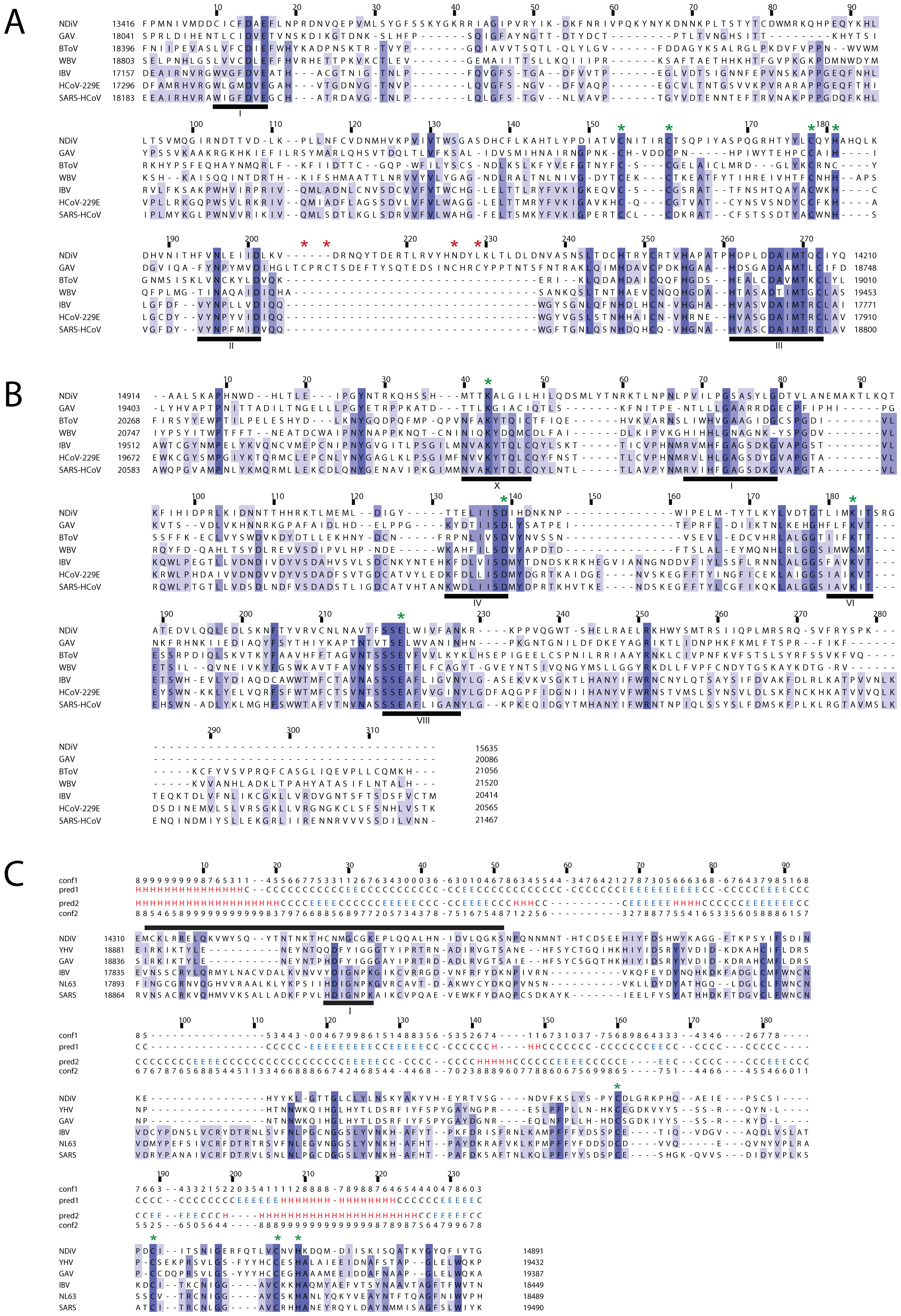 Alignments of ExoN, OMT and NMT domains of NDiV and other nidoviruses.