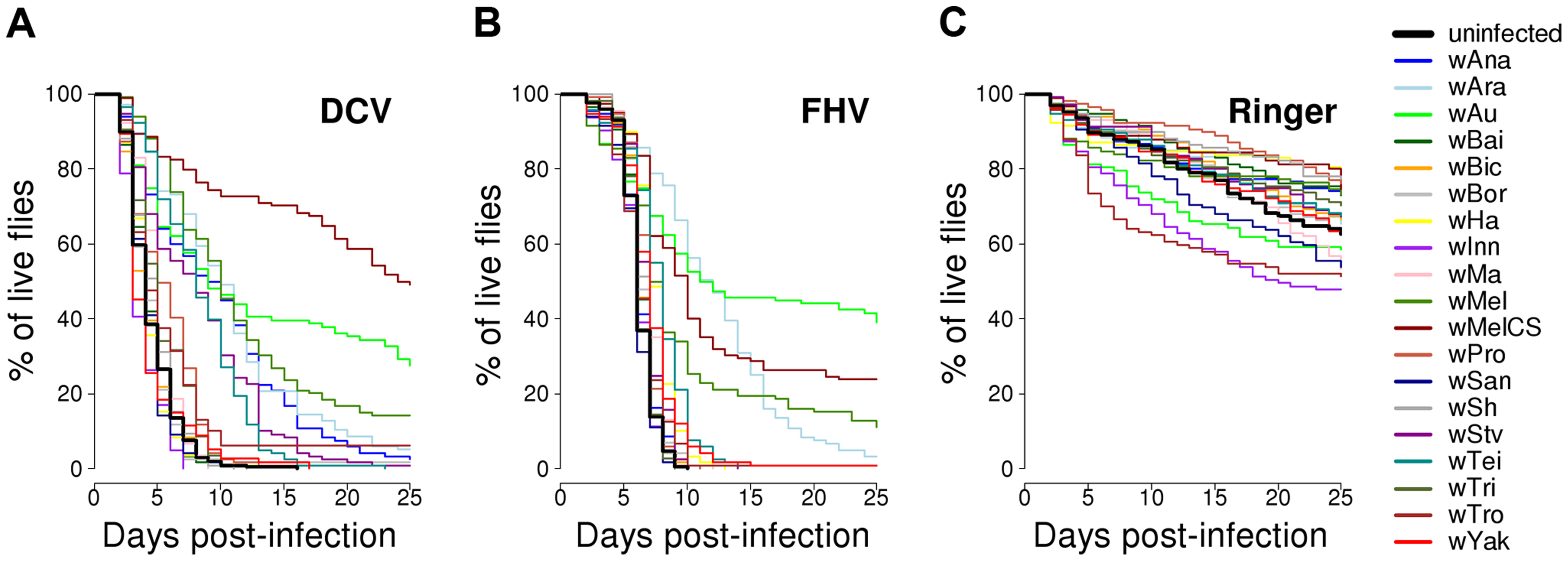 Survival of flies carrying different <i>Wolbachia</i> strains or being <i>Wolbachia</i>-free.