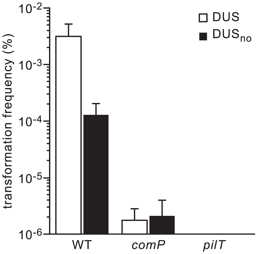 DUS enhancement of transformation in <i>N. meningitidis</i> 8013 is significant and ComP-dependent.