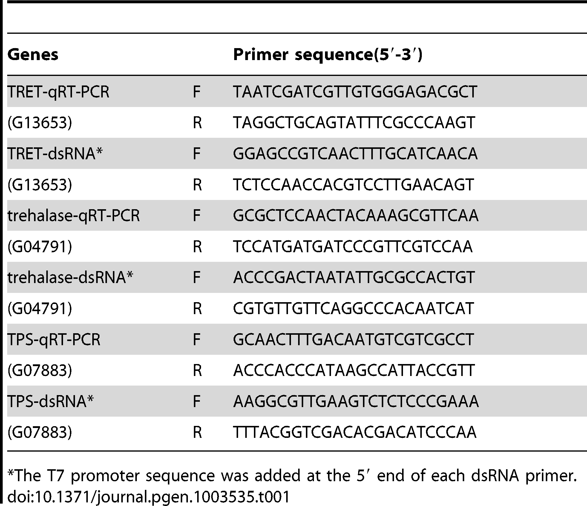 Primers used for dsRNA and real time PCR.