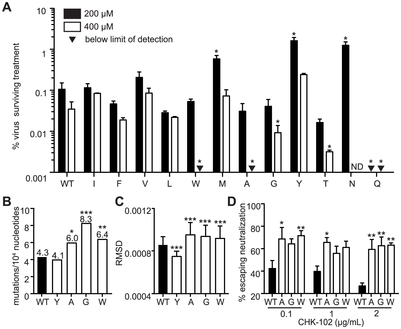Mutagenizing position 483 variants allows isolation of mutator variants.