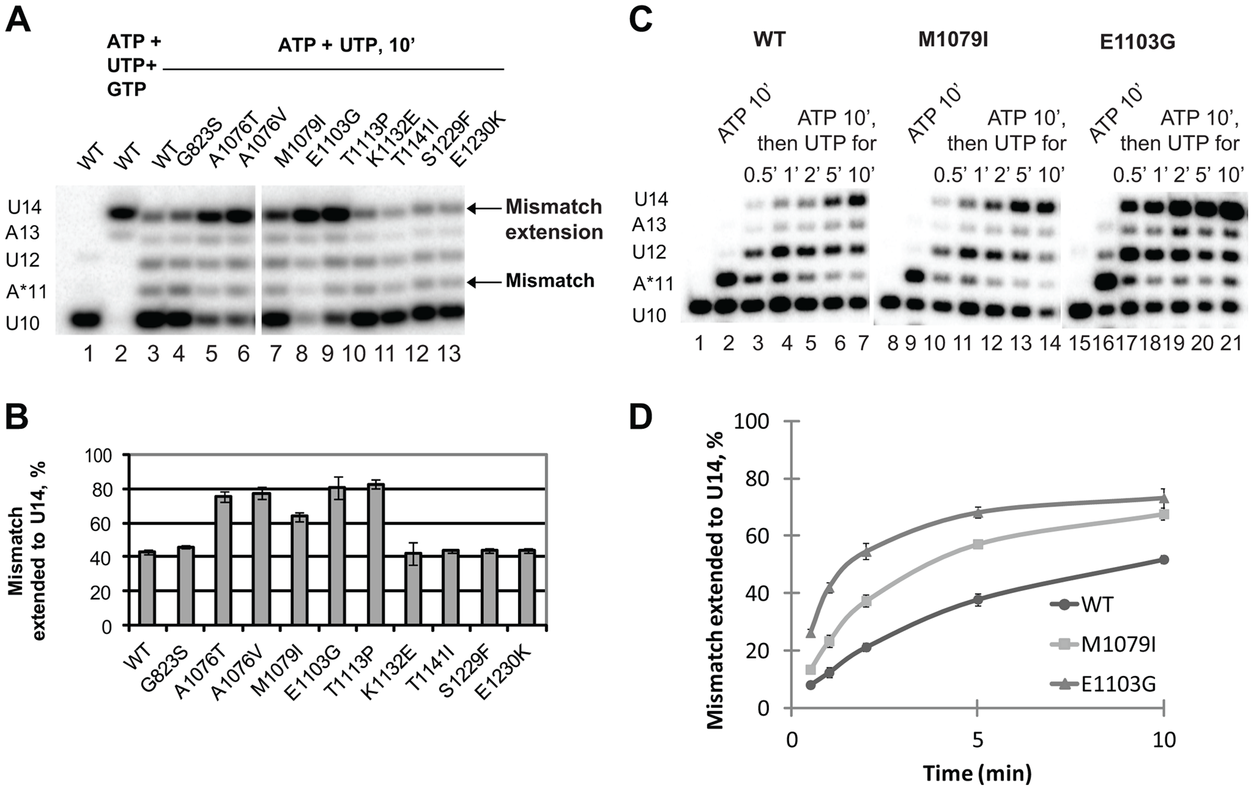 Mismatch extension by Pol II variants carrying mutations in Rpb1.