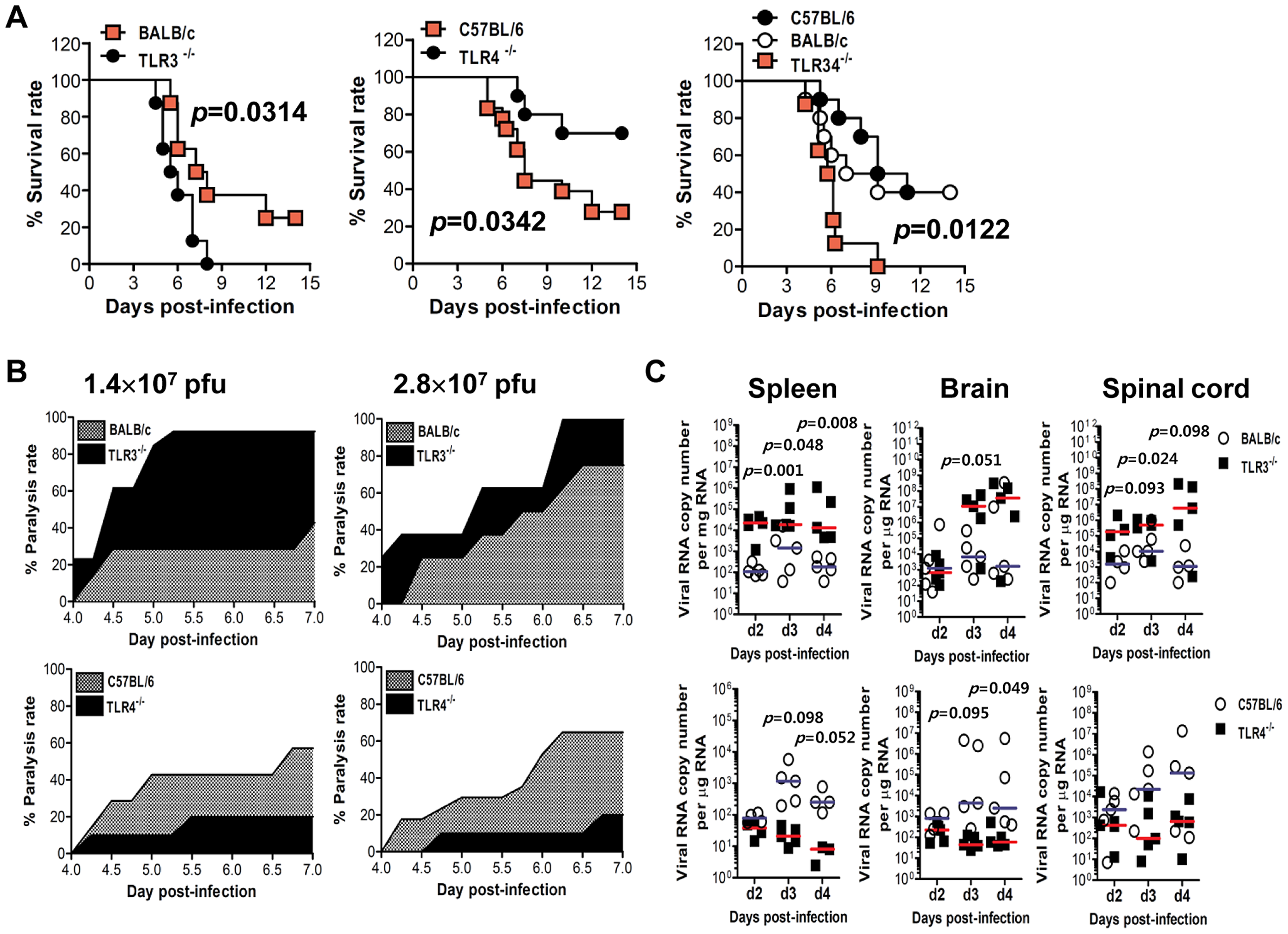 Contrasting regulation of JE by triggering TLR3 and TLR4 signal pathway.