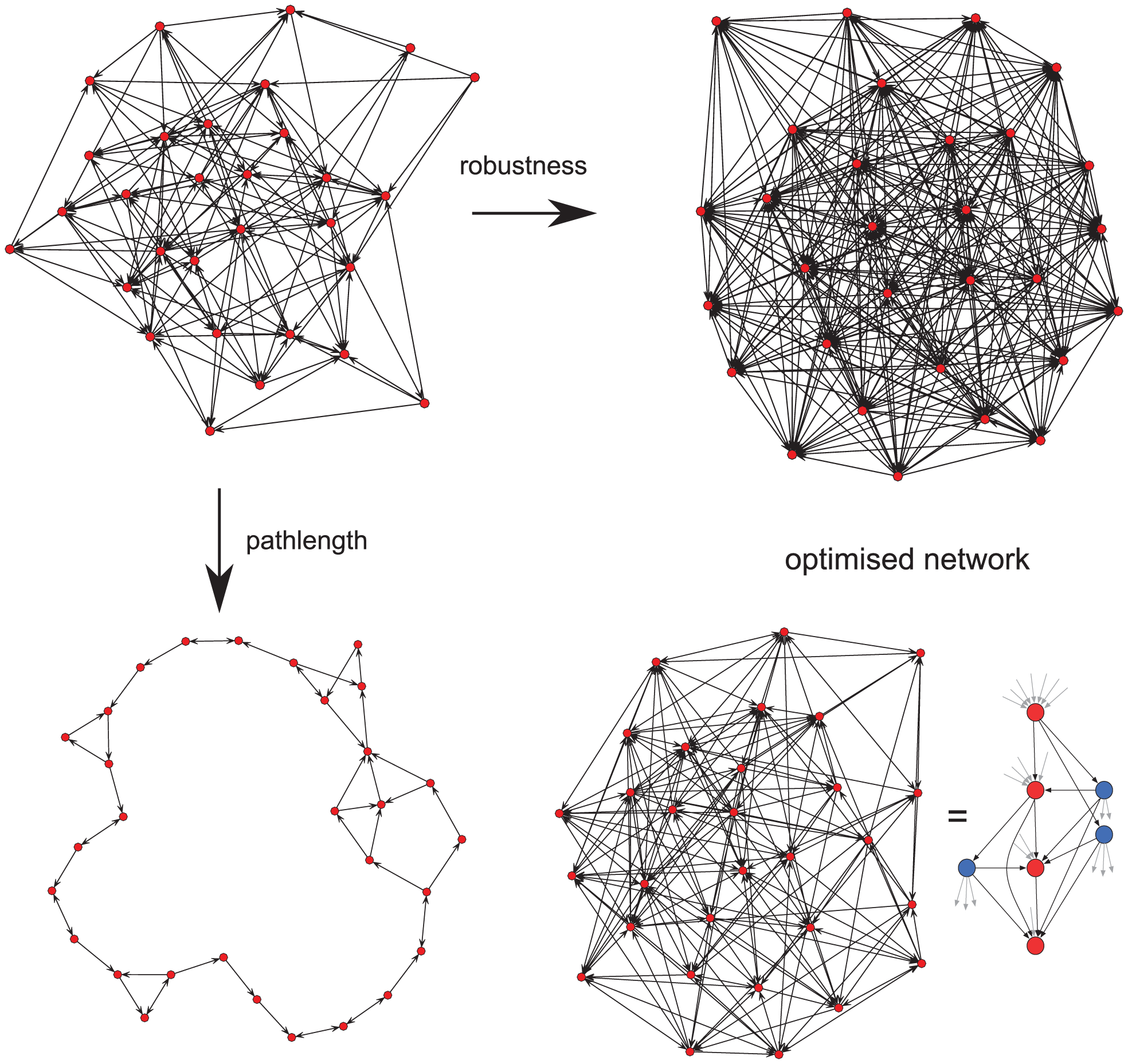 Network optimisation over two evolutionary traits.
