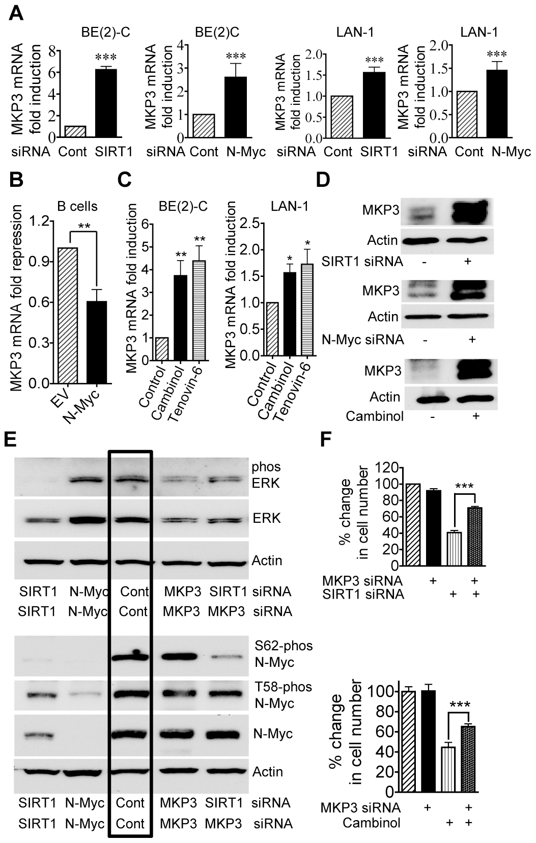 Repression of MKP3 gene expression is required for SIRT1-induced N-Myc protein stabilization and SIRT1-induced cell proliferation.