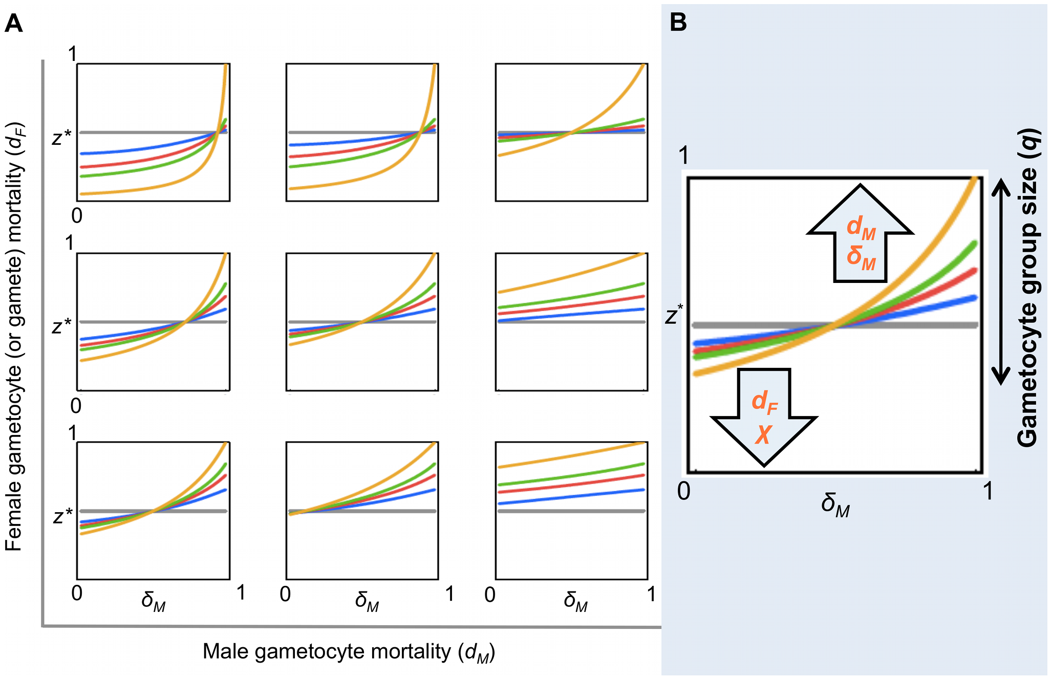 Evolutionarily stable sex allocation strategies when sex- and stage-specific mortality rates vary.