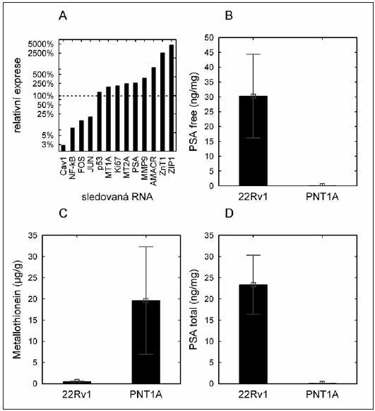 Hladina národových markerů u buněčných linií. (A) – hladina mRNA markerů vyjádřená jako relativní násobek exprese nádorové linie (22Rv1) oproti nenádorové linii (PNT1A); (B) – hladina volného PSA (obsah proteinu) v buněčných liniích; (C) – hladina metalothioneinu (obsah proteinu) v buněčných liniích; (D) – hladina celkového PSA v buněčných liniích (obsah proteinu).