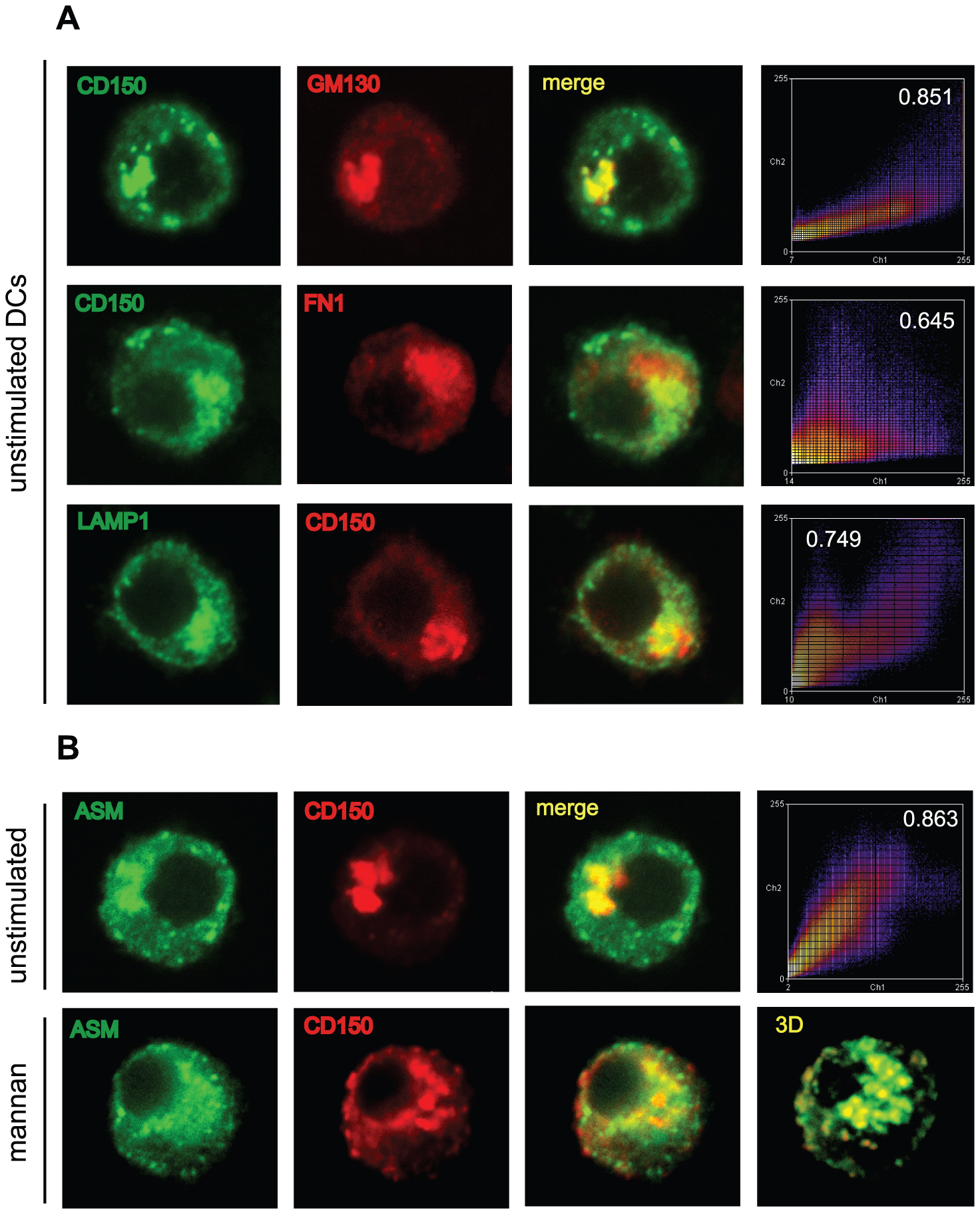 ASM is co-transported with CD150 from lysosomal compartments upon DC-SIGN ligation.