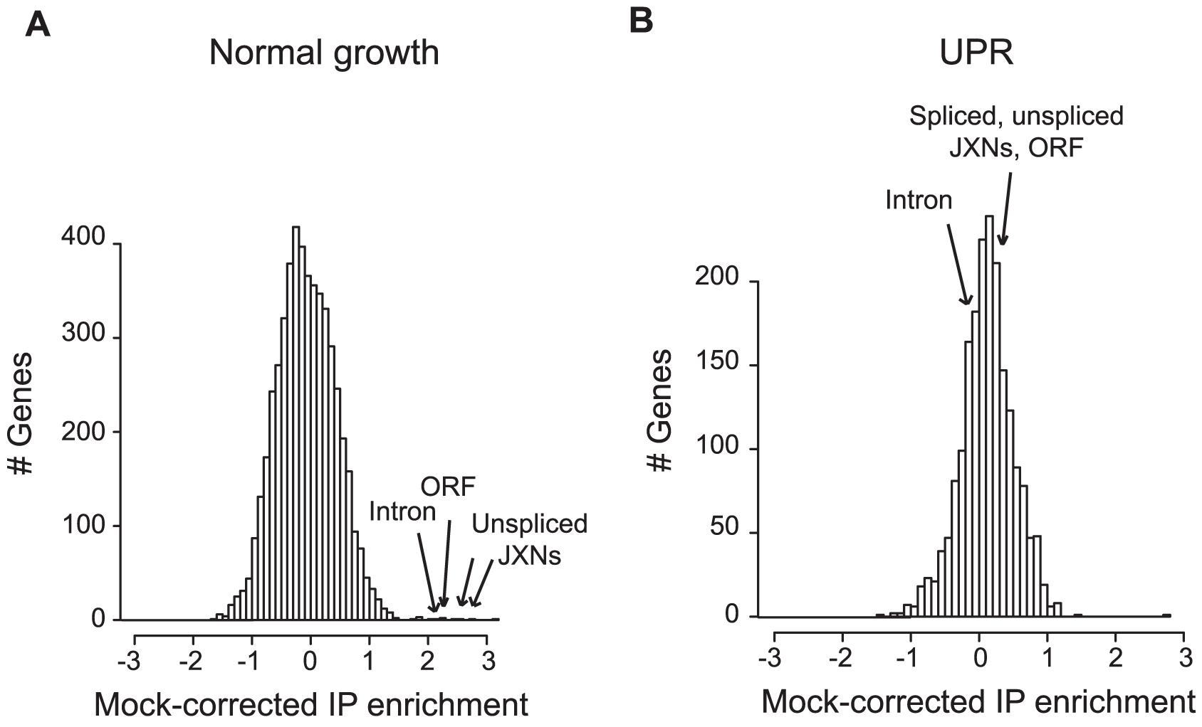 Ypt1 associates <i>in vivo</i> <b>with unspliced </b><b><i>HAC1</i></b> <b>in a UPR–dependent manner.</b>