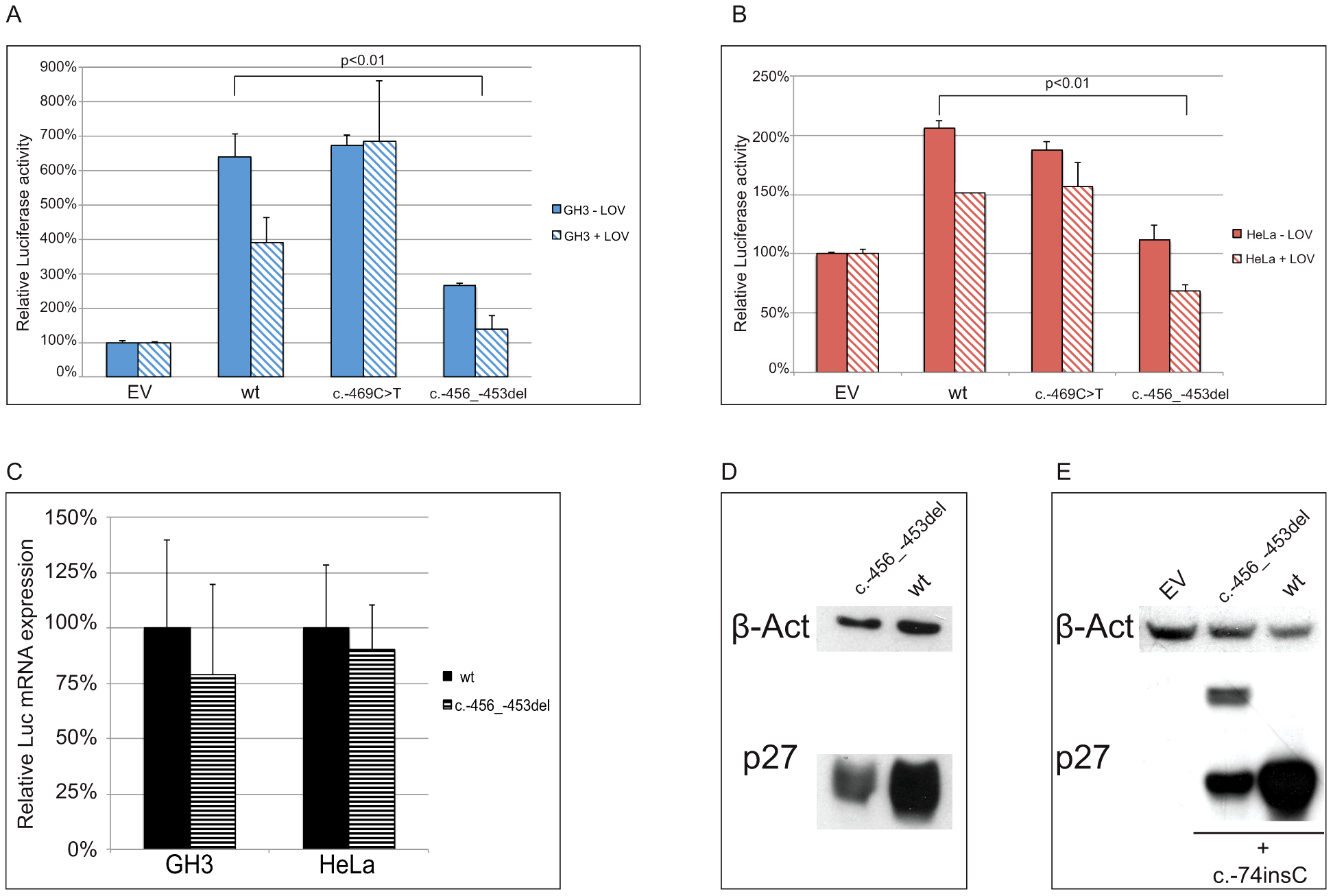 The c.-456_-453delCCTT affects protein translation by reducing reinitiation.