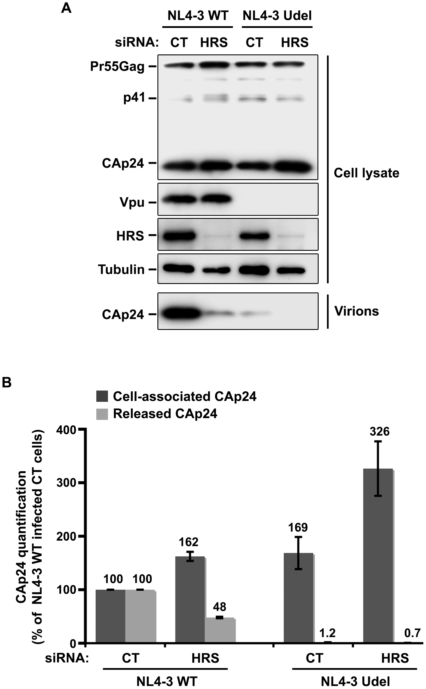 Impact of HRS depletion on the release of Vpu defective HIV-1 particles.