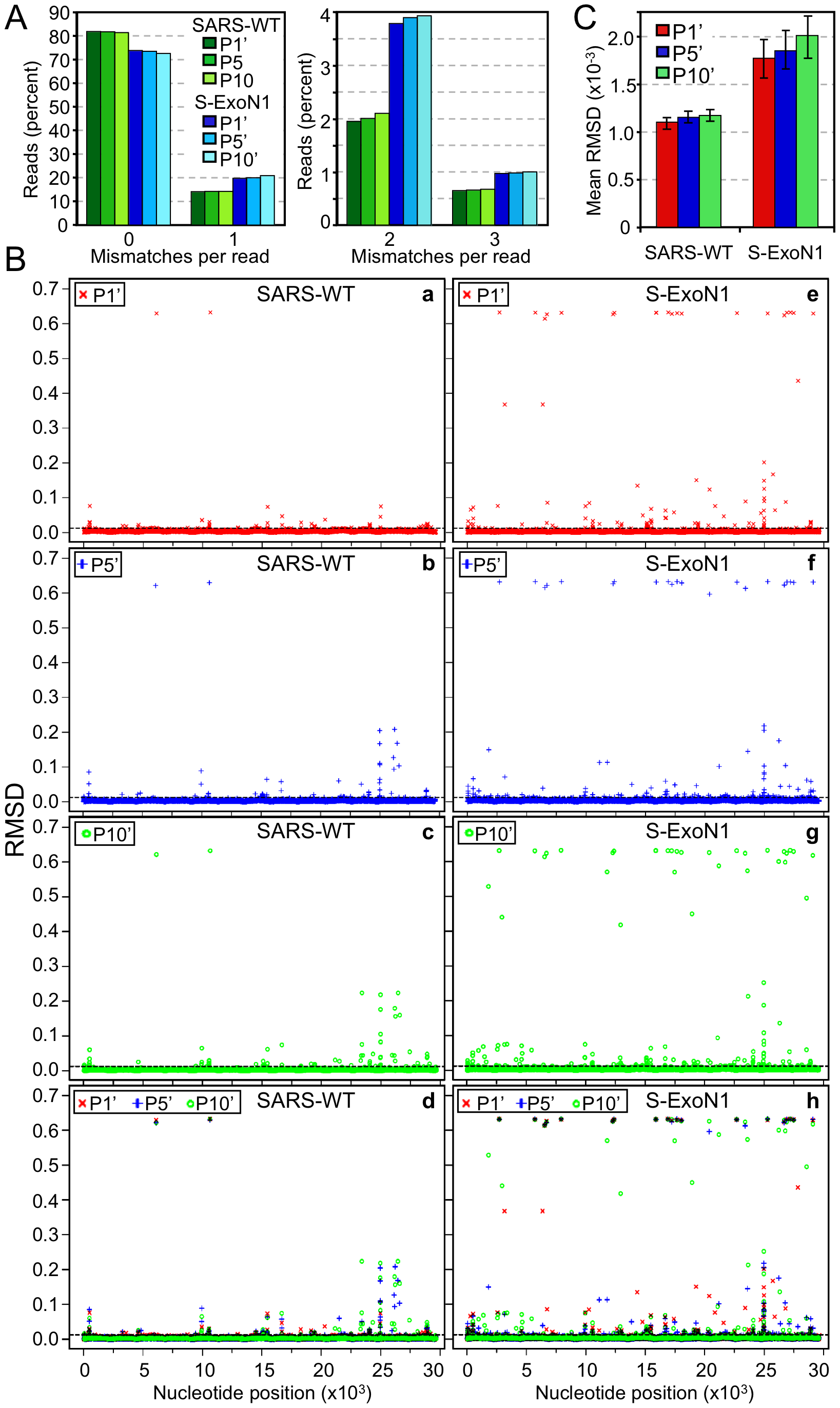 Genetic diversity of SARS-WT and S-ExoN1 from P1', P5', and P10'.
