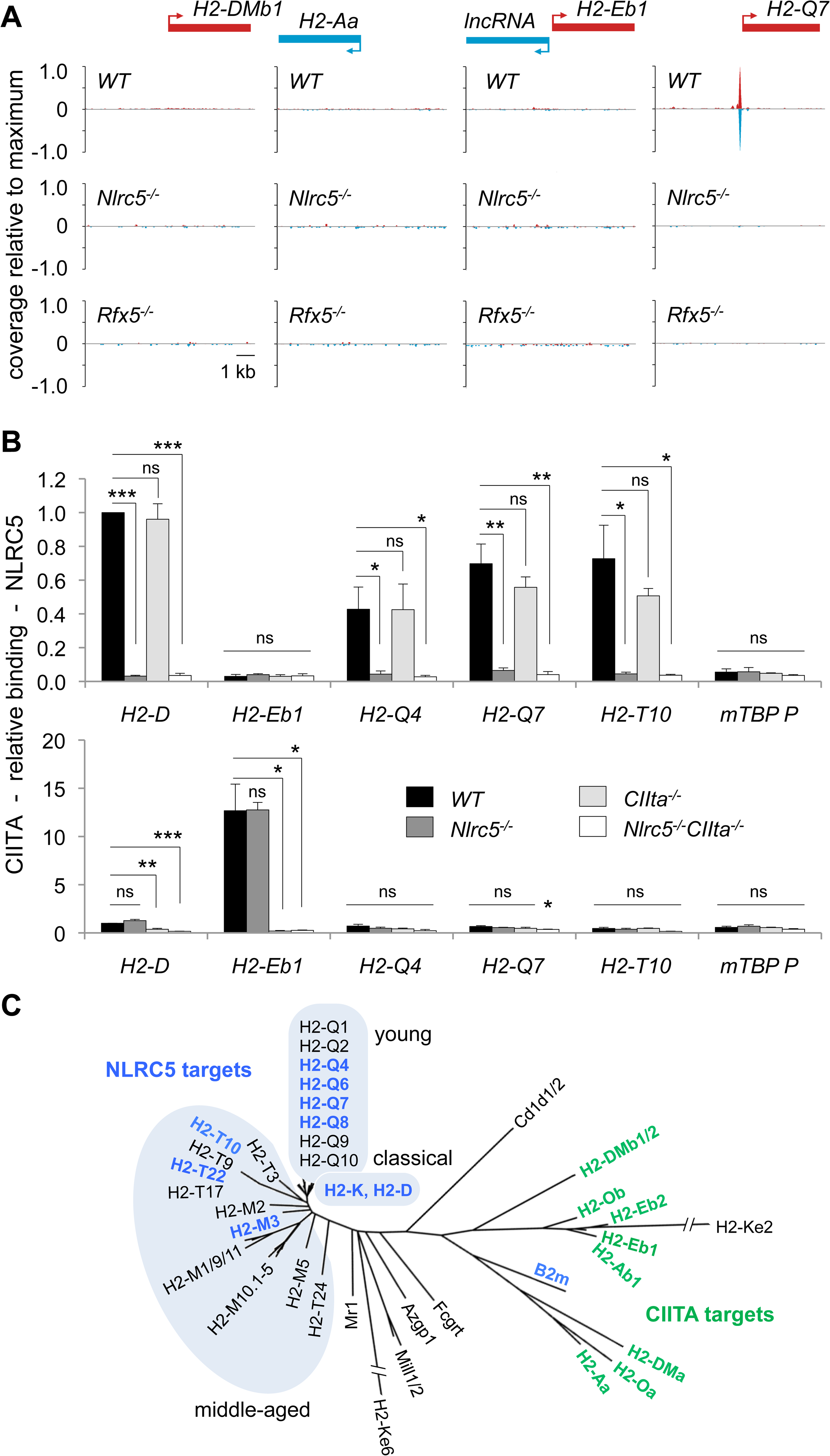 NLRC5 selectively occupies MHCI gene promoters.