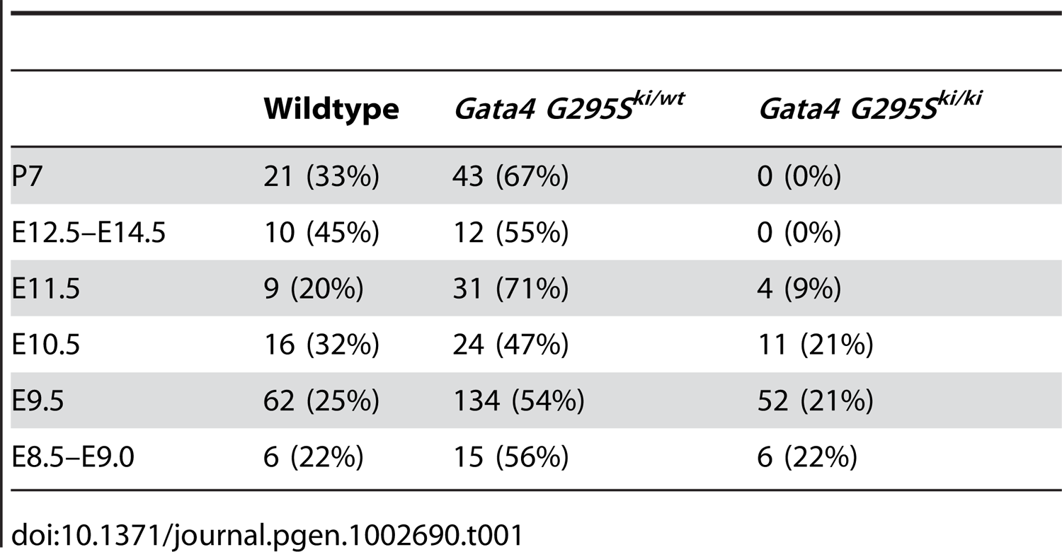 Distribution of progeny obtained from intercrossing Gata4 G295S heterozygote mice.