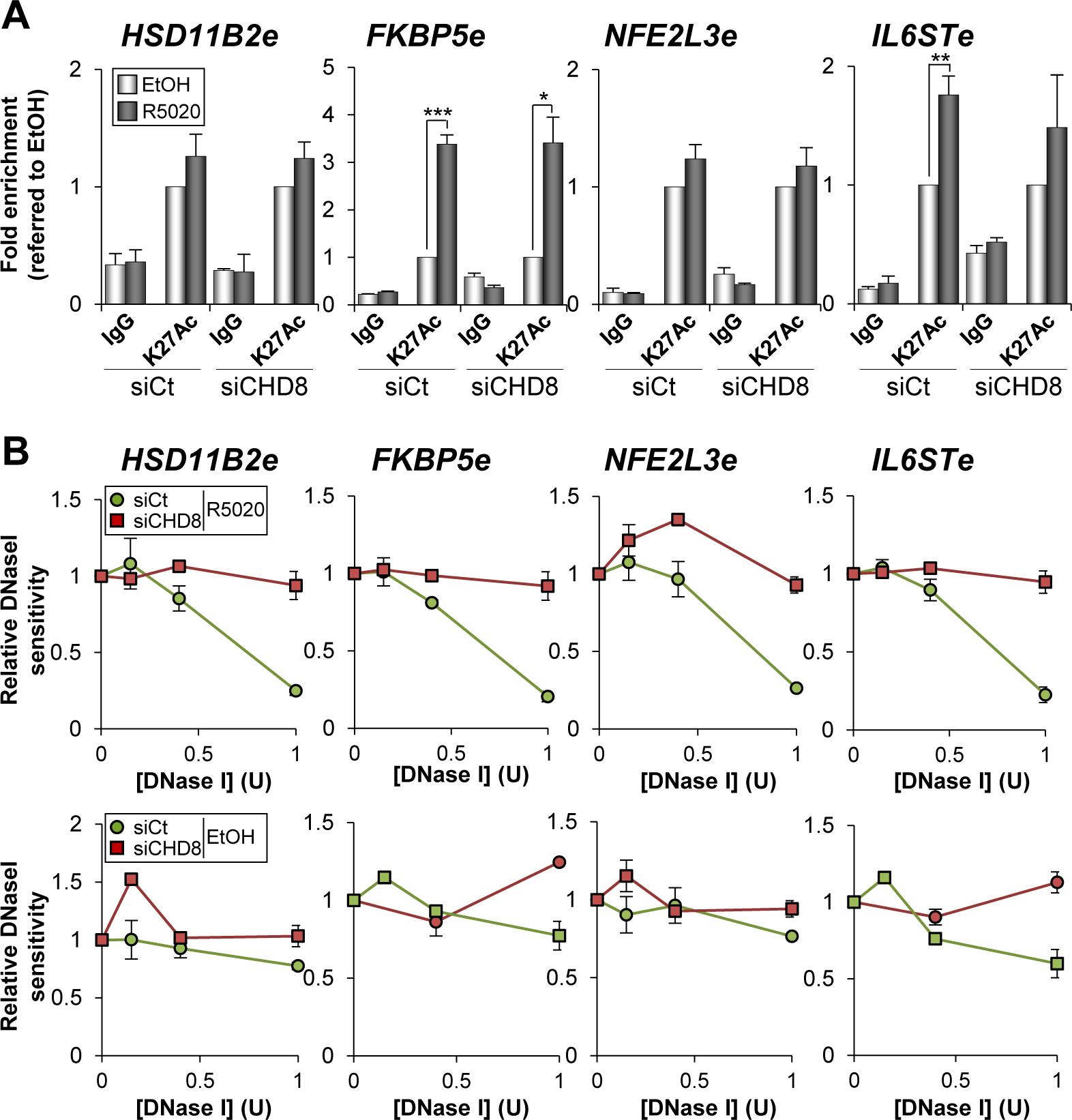 CHD8 involvement in modification of enhancer chromatin.