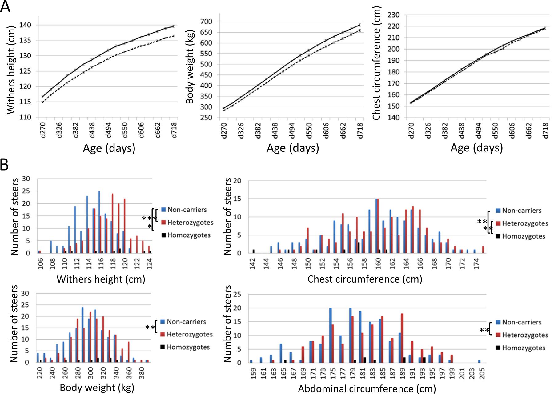 Effects of <i>CW-3 Q</i> or risk allele on skeletal measurements.