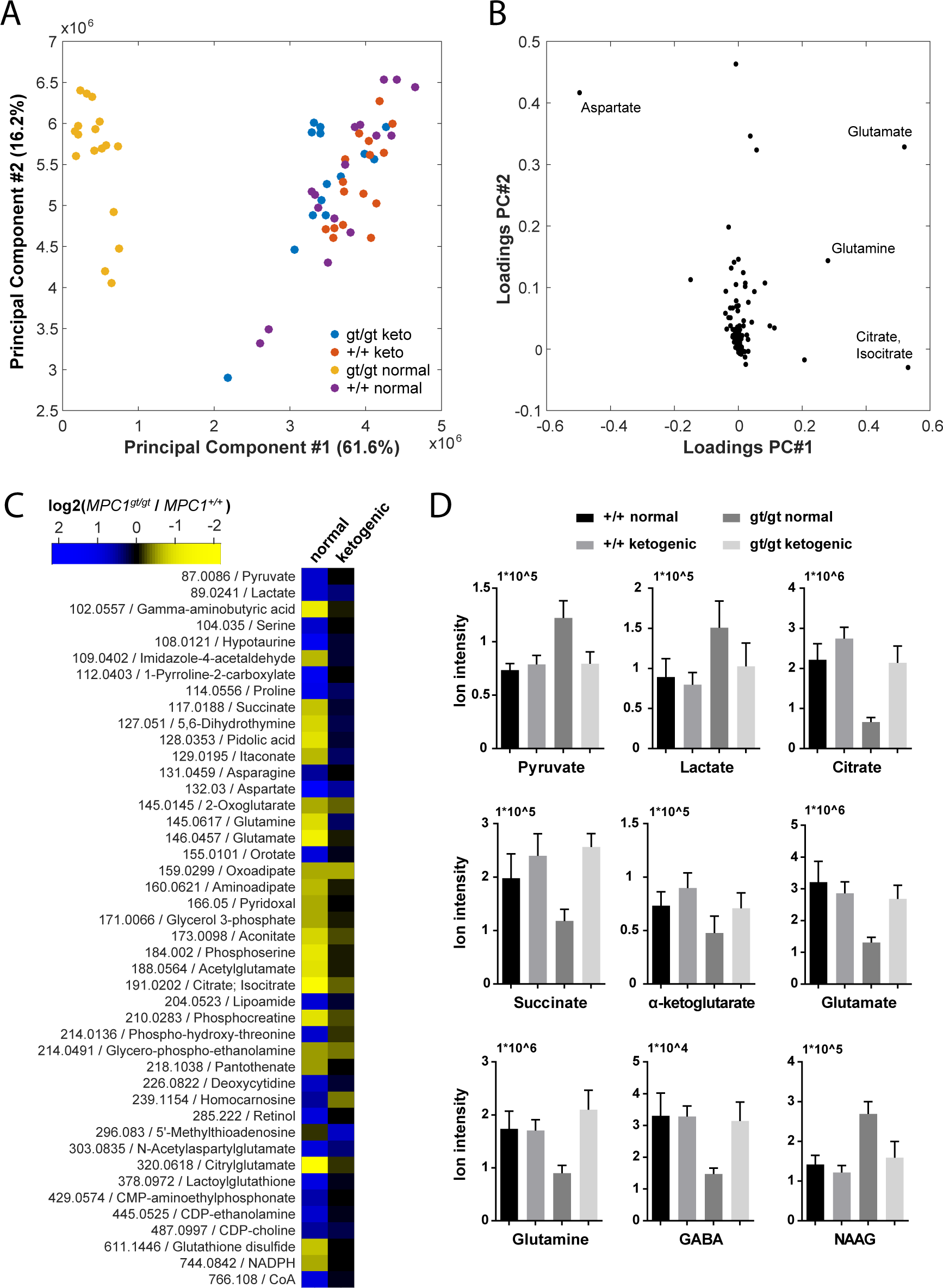 Pleiotropic alterations in the <i>MPC1</i><sup><i>gt/gt</i></sup> E13.5 brain metabolome are rescued by a ketogenic diet.