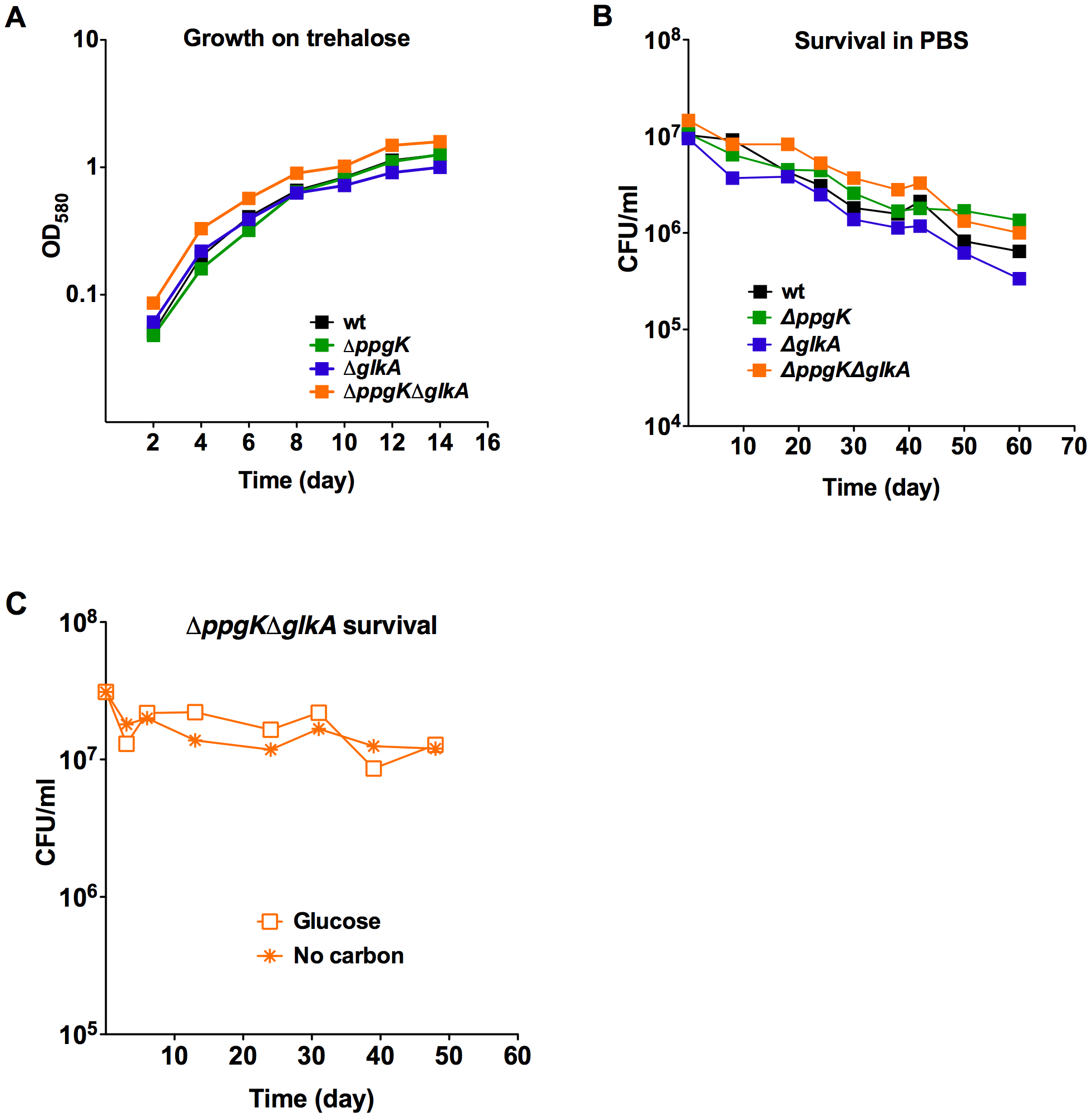 Gluokinases are dispensable for trehalose metabolism and survival during starvation.