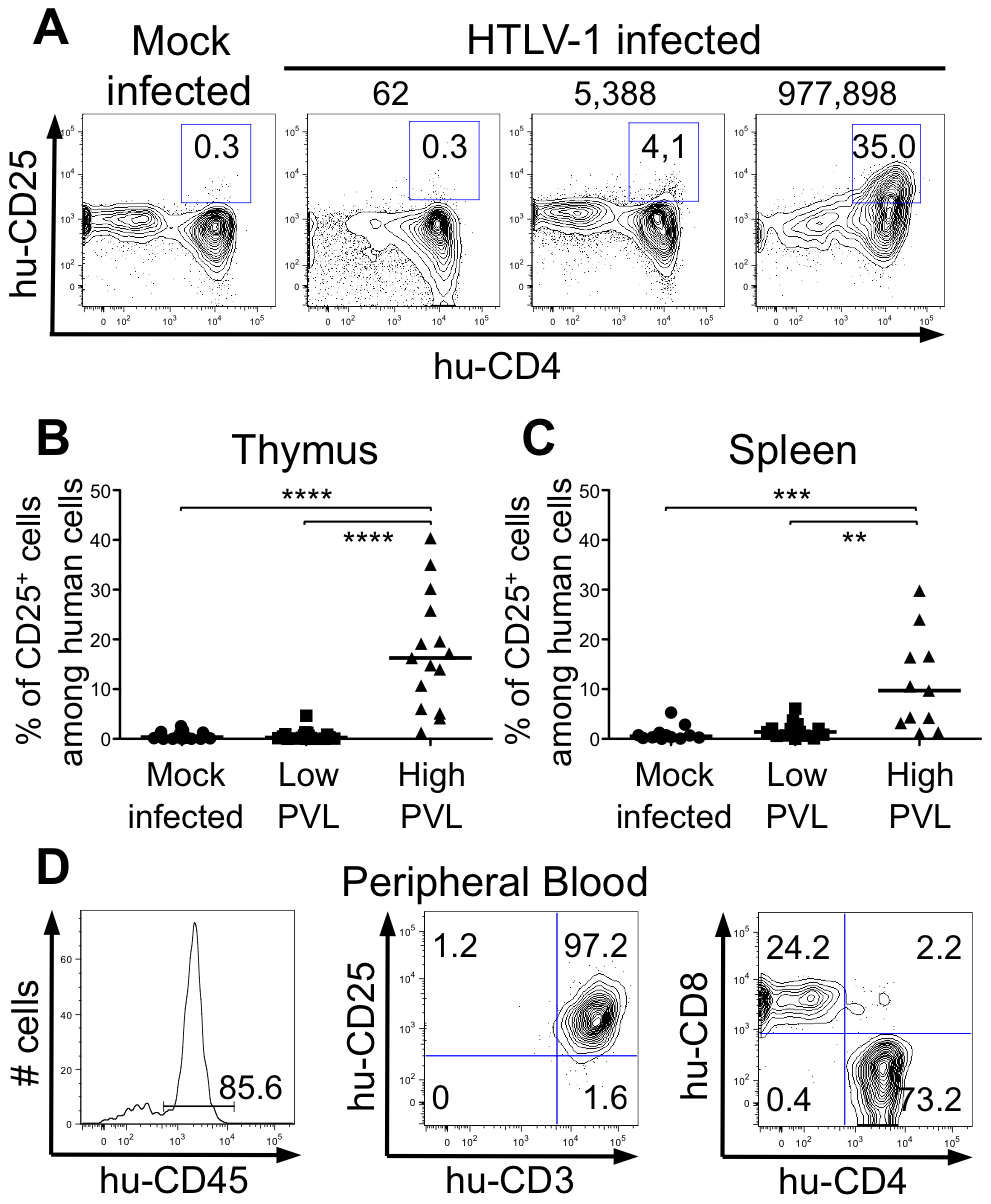 Correlation between expression of CD25 activation marker and HTLV-1 proviral load.