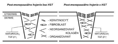 Maturačná fáza hojenia rán v post-menopauzálnom období života je charakteristická poklesom expresie TGF-ß1, čo vedie k nižšej depozícii a organizácii kolagénu. Navyše dochádza aj k tvorbe tenšej epidermis. Hojenie rán po HST je stimulované k normálnemu priebehu. HST – hormonálna substitučná terapia, TGF-ß1 – transformujúci rastový faktor beta 1