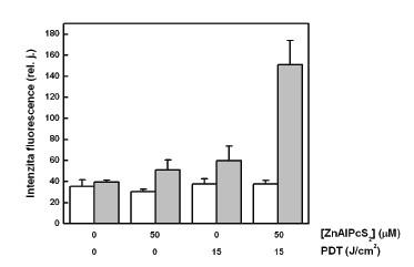 Relativní množství cytochromu c stanovené-ho pomocí ELISA metody, vyjádřené jako relativní intenzita fluorescence navázaných sekundárních proti-látek, která je vztažena na jednotku množství všech proteinů vanalyzovaných vzorcích – cytozolová frakce (sloupce bez vybarvení), mitochondriální frakce (šedé sloupce). Analýza cytochromu c byla provedena na buňkách G361 vystavených účinku PDT. Zobrazená data reprezentují průměrné hodnoty a směrodatné odchylky ze 3 nezávislých měření.