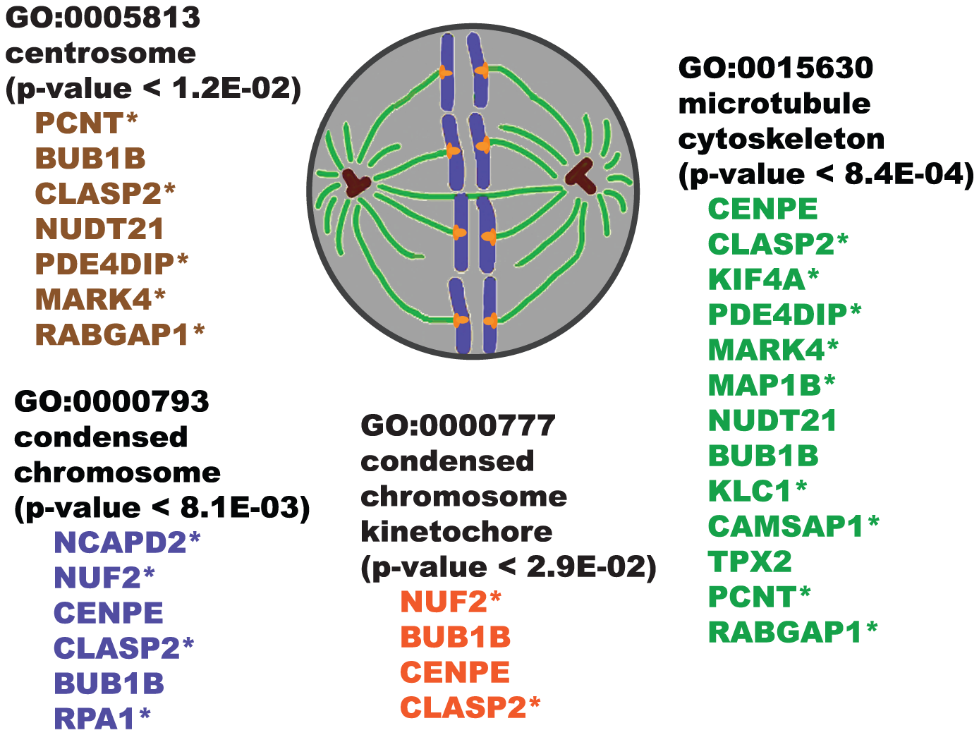"""Illustration showing overrepresented GO """"cellular component"""" categories for SWI/SNF co-purifying proteins."""