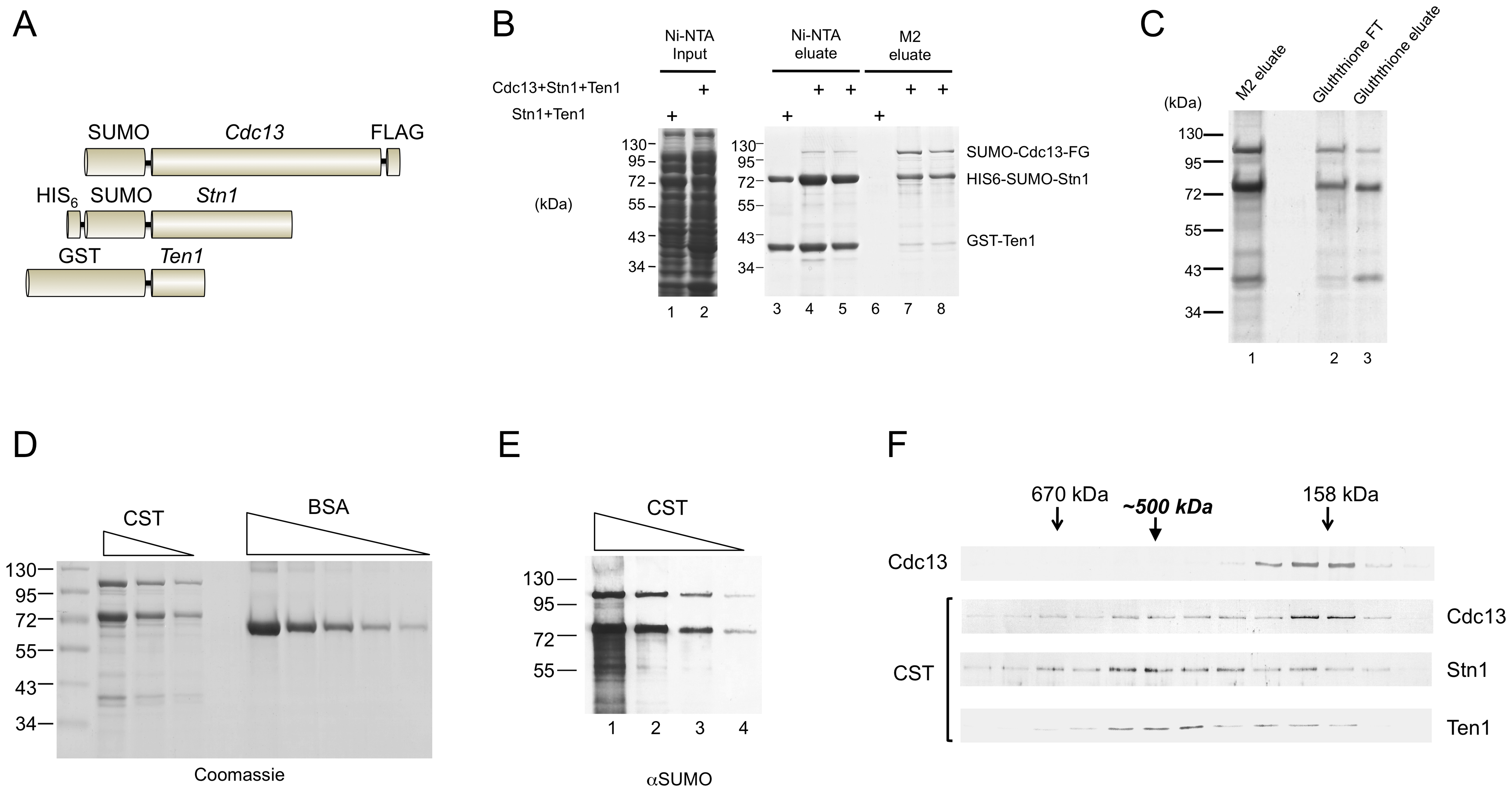 Purification and characterization of the <i>C. glabrata</i> CST complex.