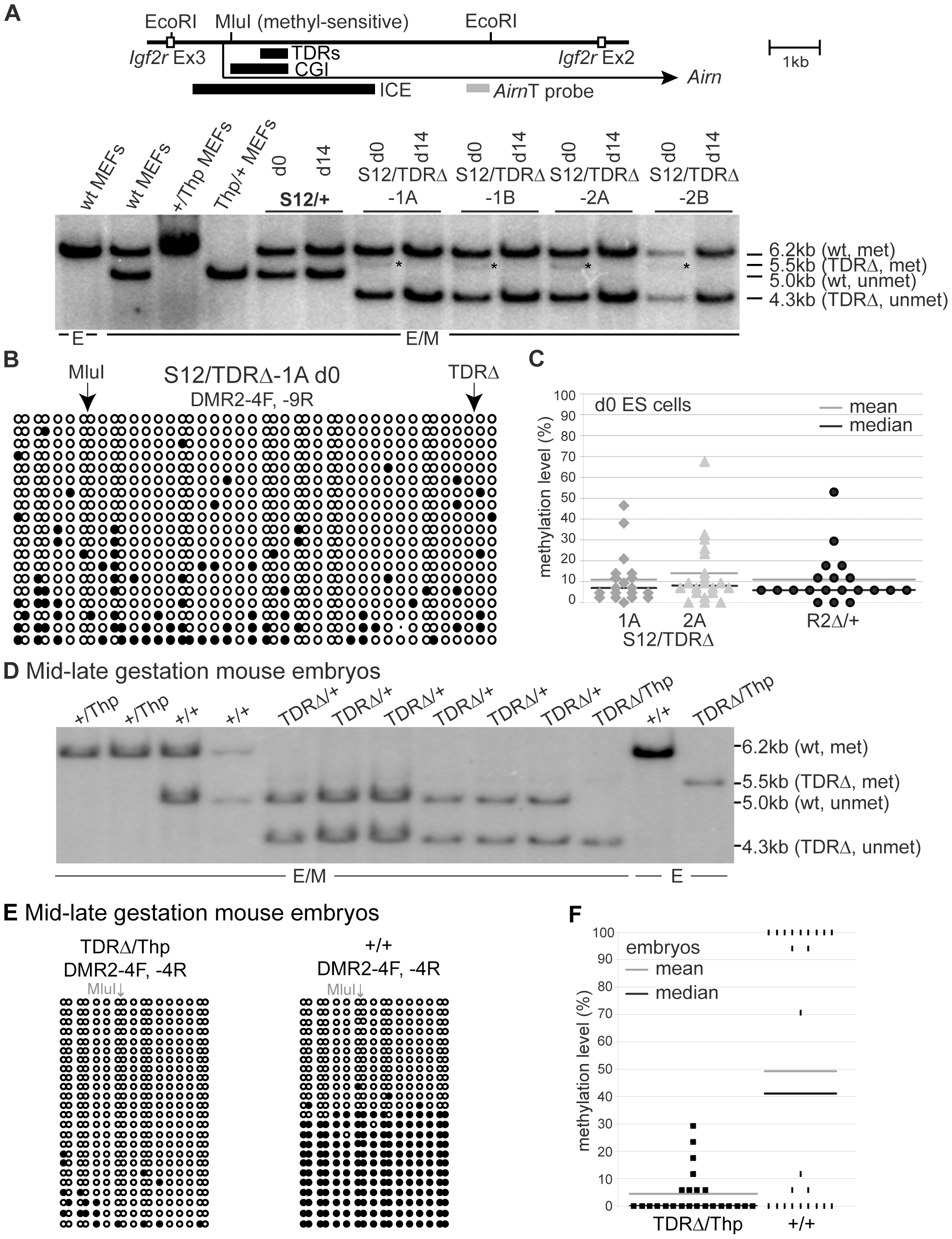TDRs are required for the regulation of ICE DNA methylation.