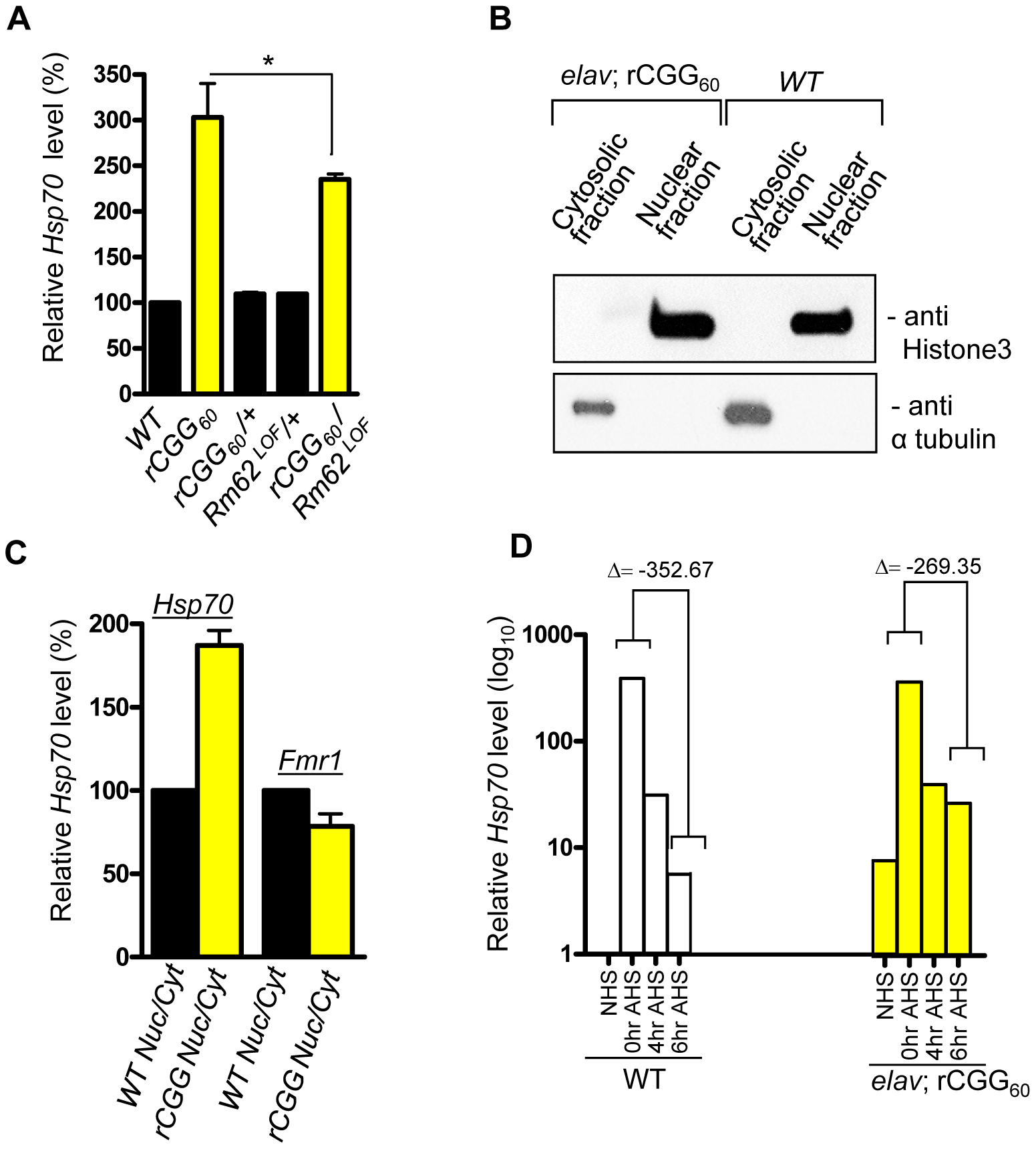 Fragile X premutation rCGG repeats cause the nuclear accumulation of Hsp70 mRNA.