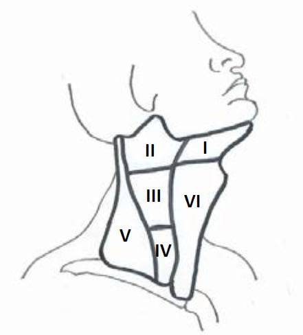 Kompartmenty krčních lymfatických uzlin