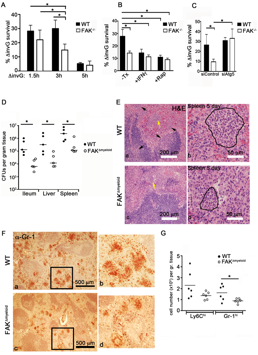 FAK deficiency improves control of <i>Salmonella</i> infection.