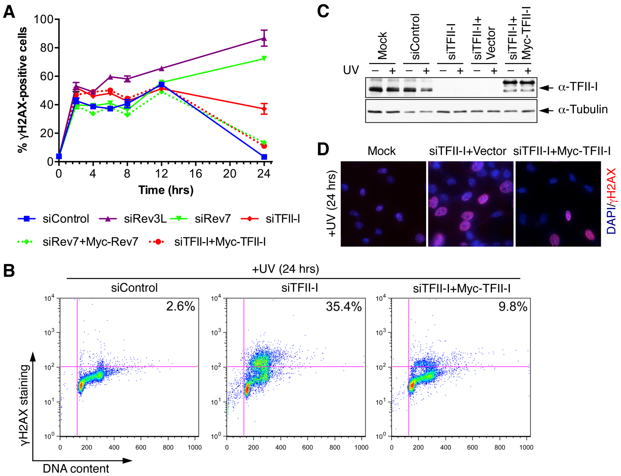 TFII-I is required for DNA damage tolerance in human cells.