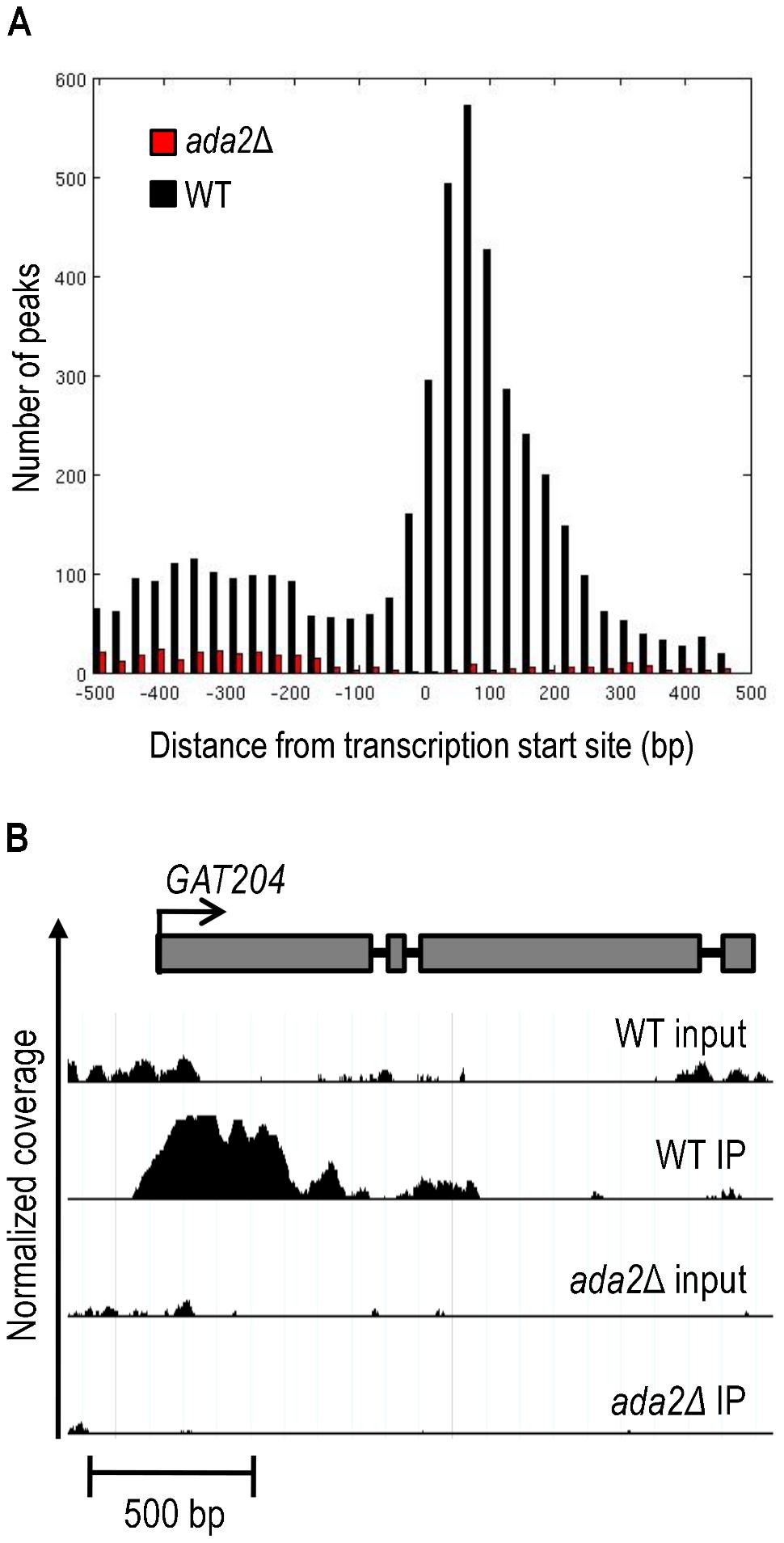 Ada2-dependent acetylation of H3K9 is enriched near gene transcription start sites.