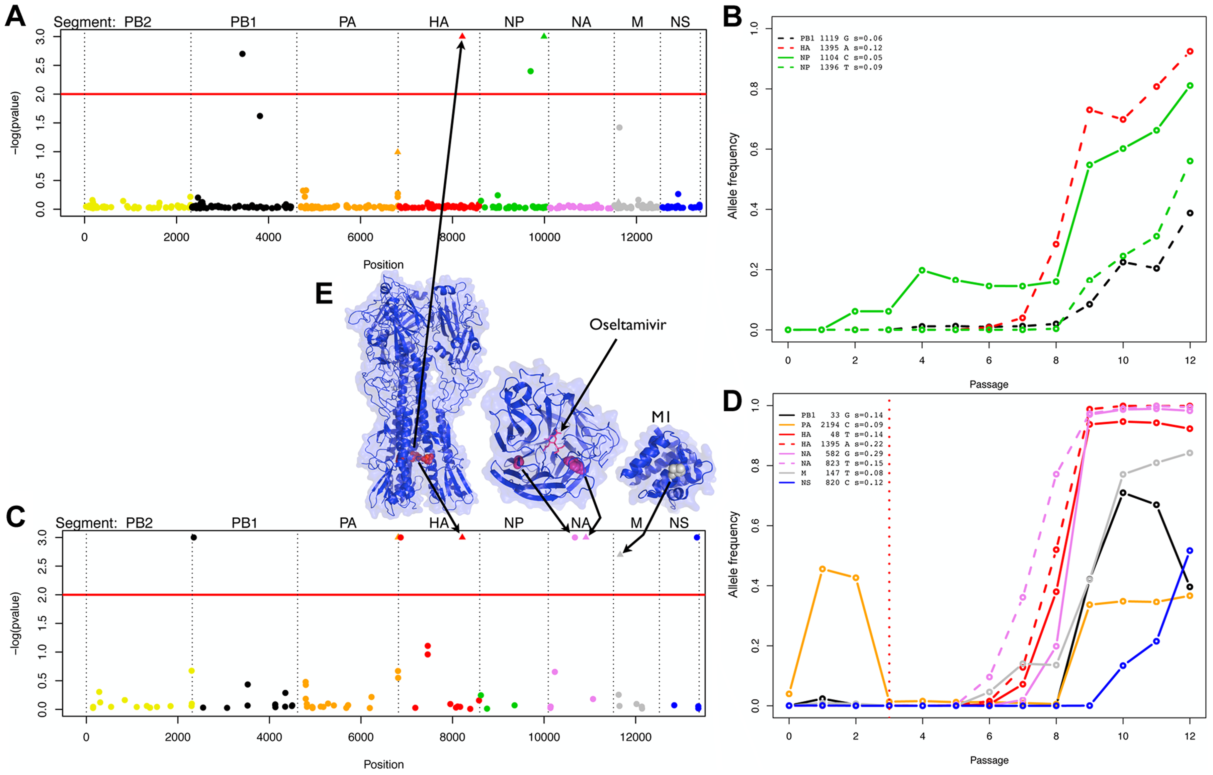 Evidence of positive selection in the H1N1 genome in the absence and presence of oseltamivir.