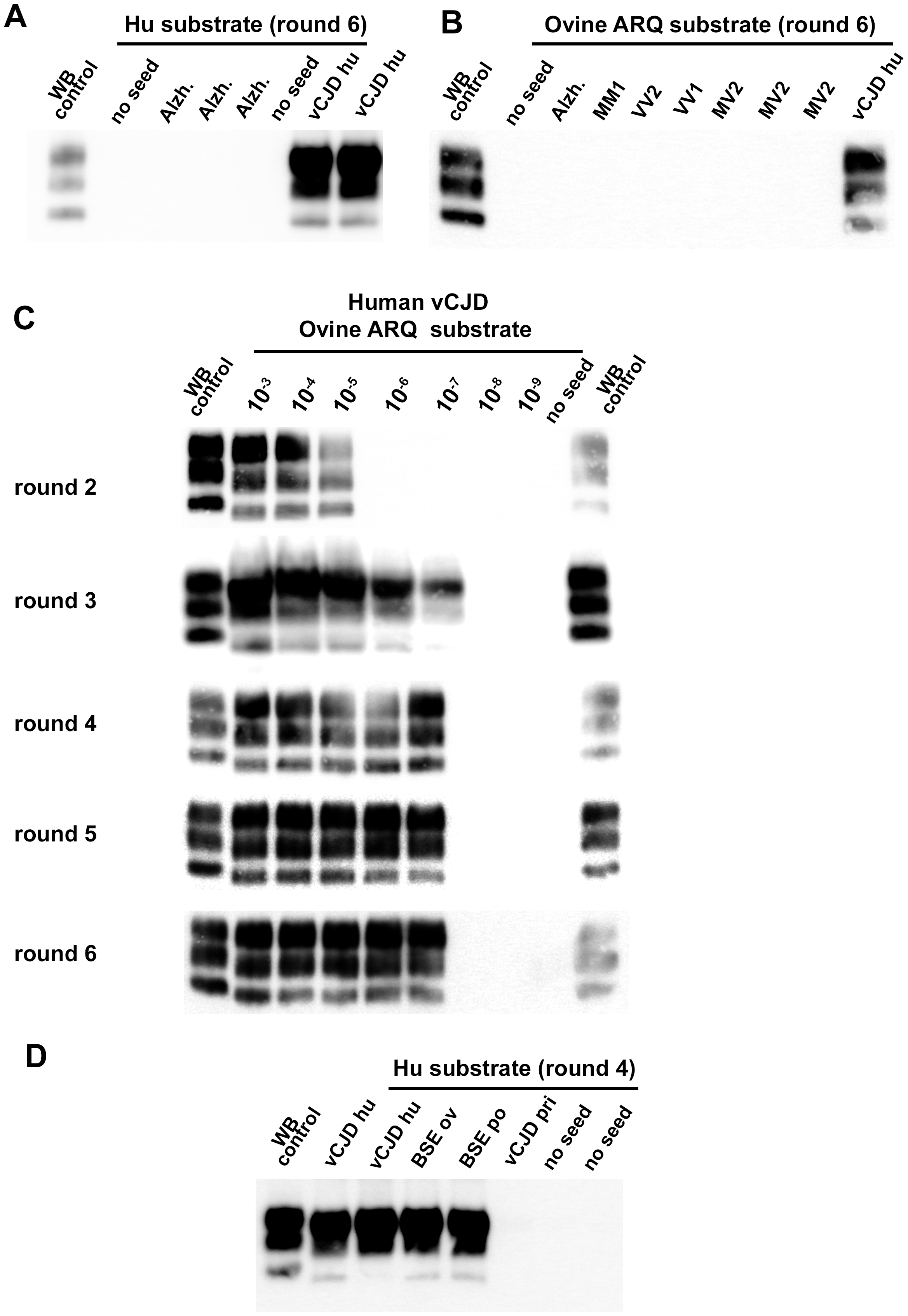 vCJD/BSE, sCJD and Alzheimer seeded Protein Misfolding Cyclic Amplification reactions using brain from transgenic mice as substrate.
